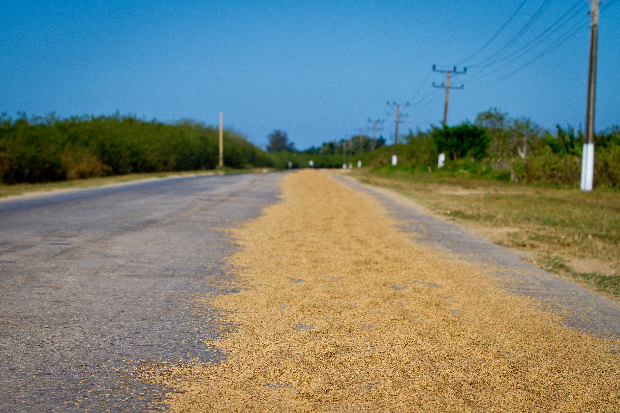 Rice drying on a country road, Cuba