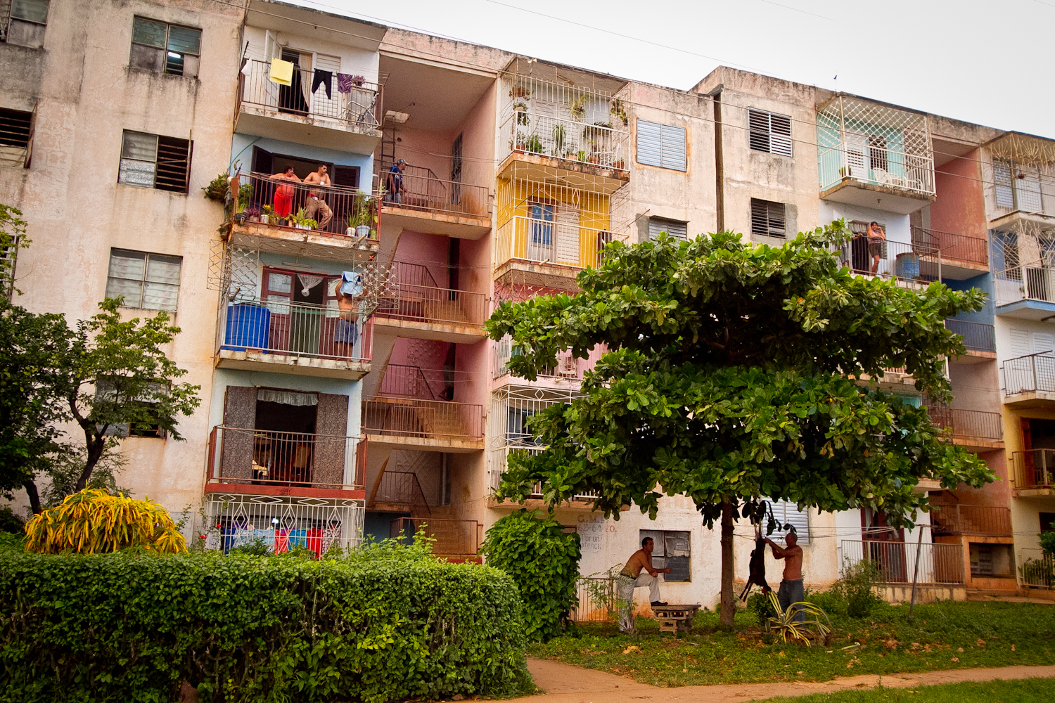 At first glance, just a typical apartment building in Cuba. Look more closely at the men under the tree. They have a freshly butchered goat hanging, while they skin it, right outside the apartment!