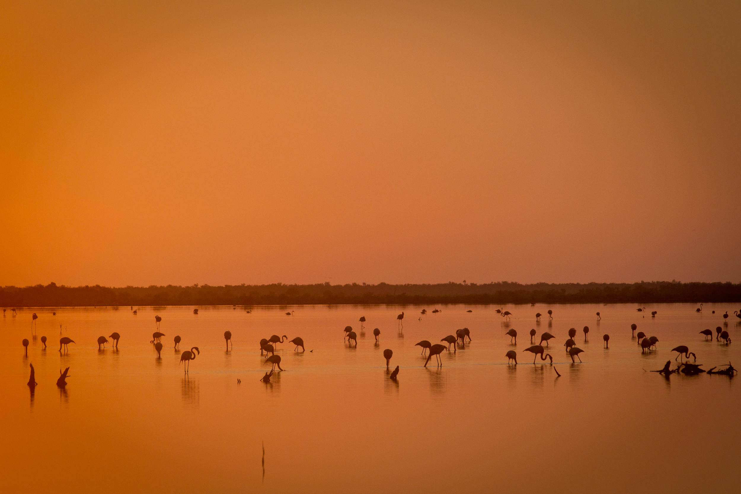 Wading Birds are plentiful