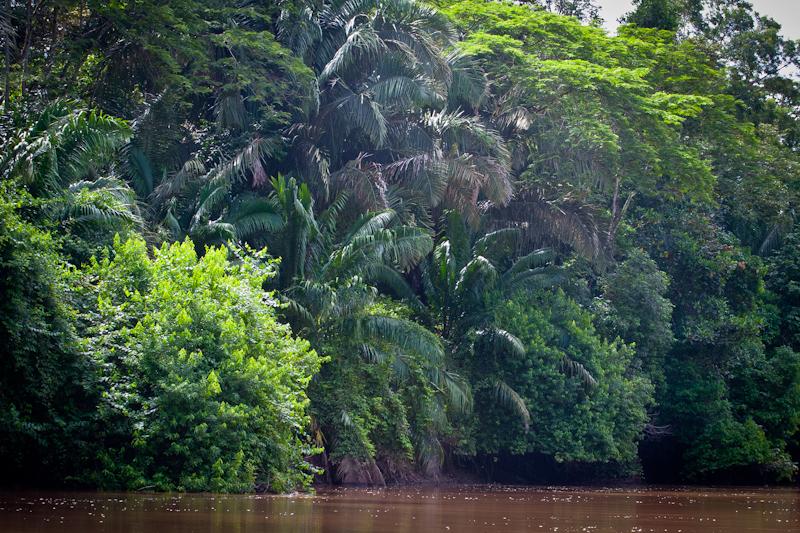 Jungle, Jungle Tarpon, Costa Rica