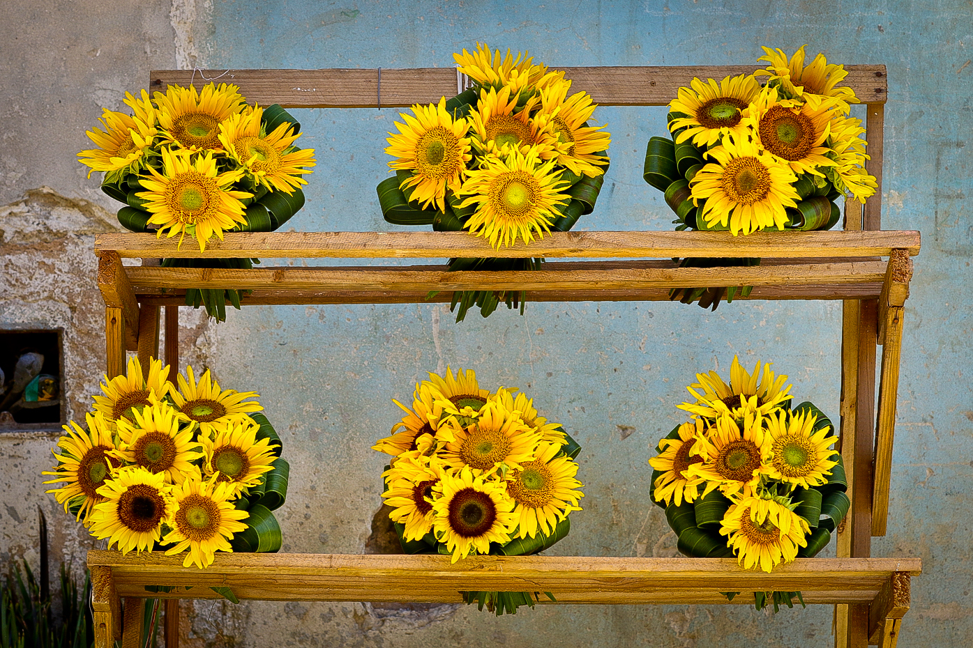 Sunflowers for sale.......