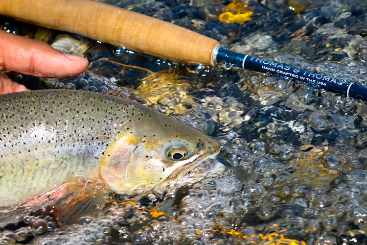 Beautiful fish and rod on moving water