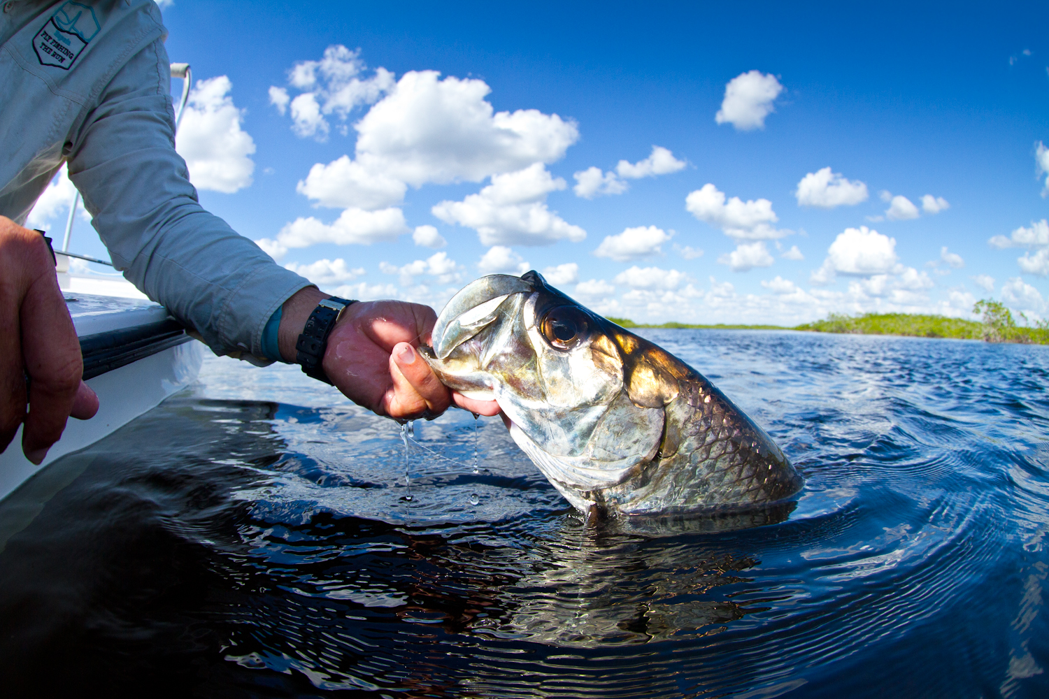 Tarpon ready for release