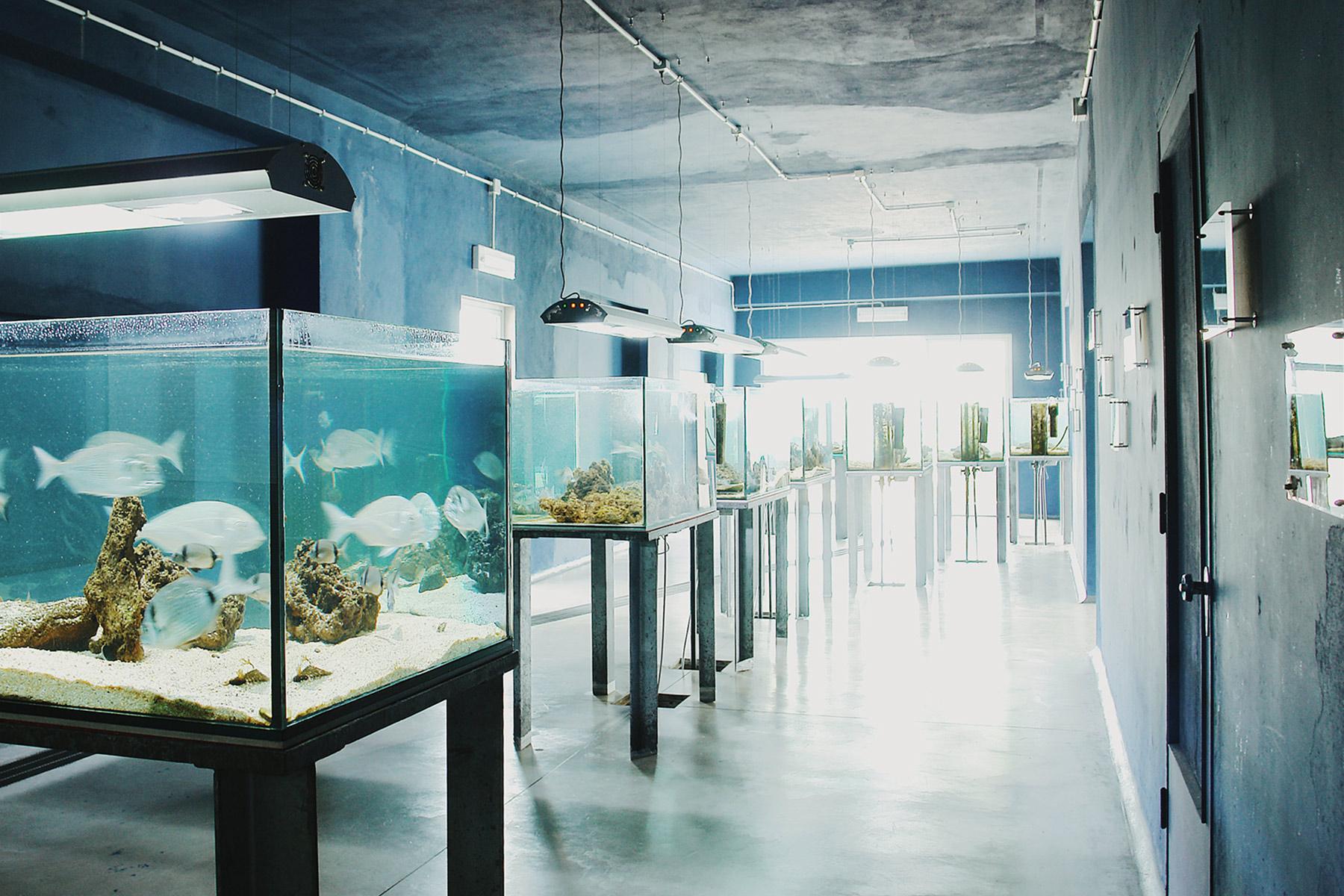 aquarium019.jpg