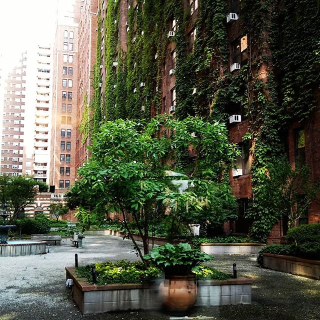 The first stylist I worked with after arriving in NYC told me about London Terrace where she lived. I've been intrigued with the block-long, art-deco-era apartment complex in Chelsea ever since.  Today I was finally able to see it in person at a meeting about a new project. The photos don't do the lovely courtyard justice. Having private, outdoor garden space in Manhattan is simply priceless. . #garden #landscapedesign #landscaping #urban #urbangarden #courtyard #courtyardgarden #design #architecture #artdeco #vintage #artwork #