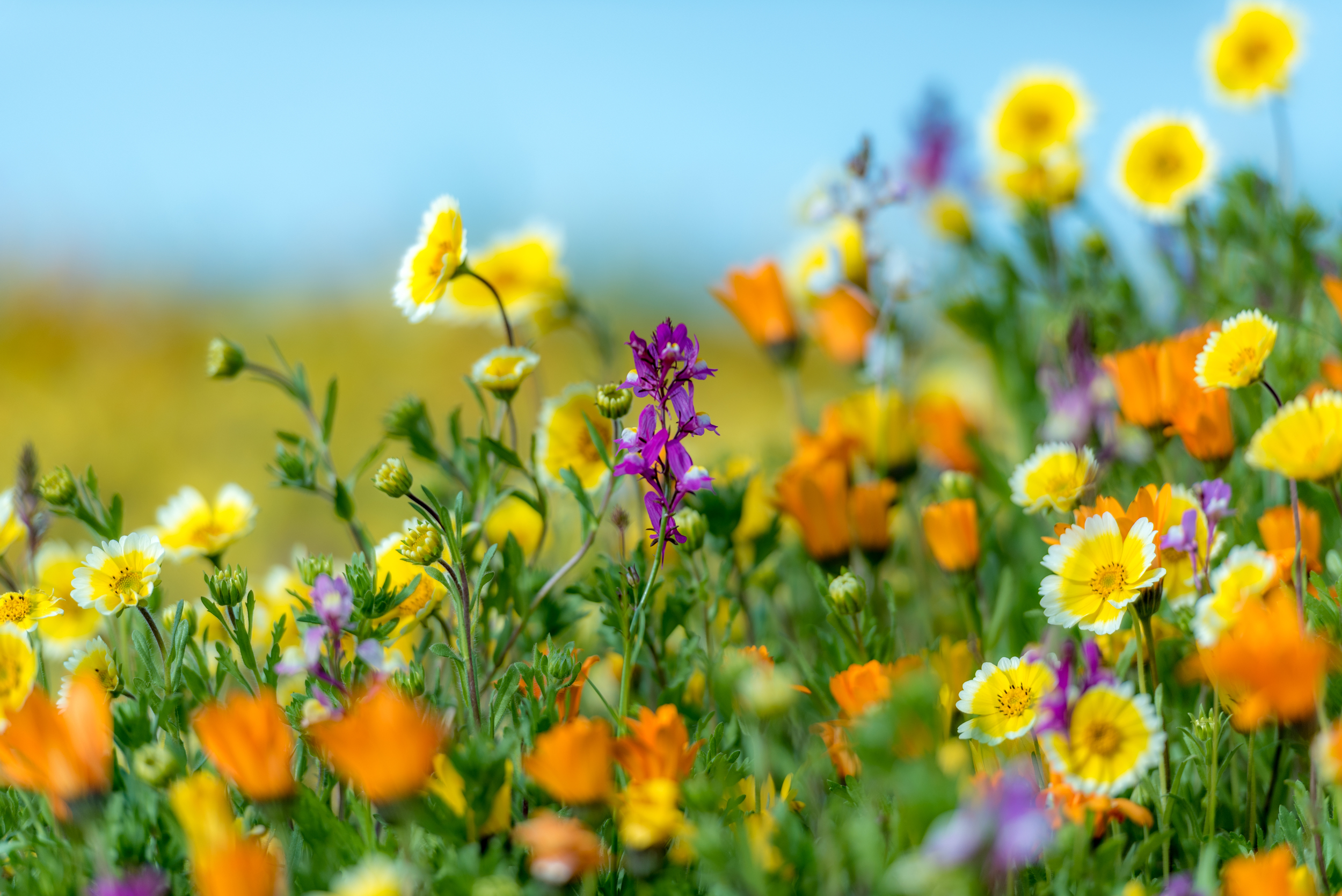 wildflowers-2.jpg