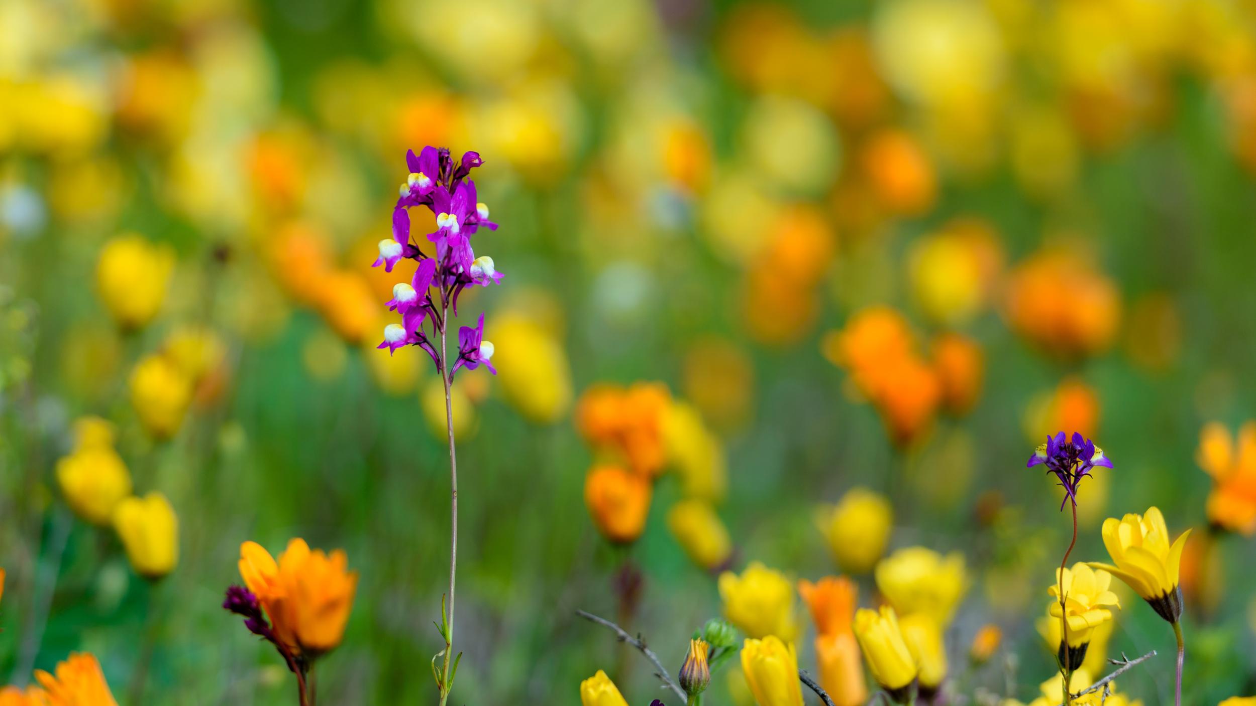 wildflowers-4.jpg