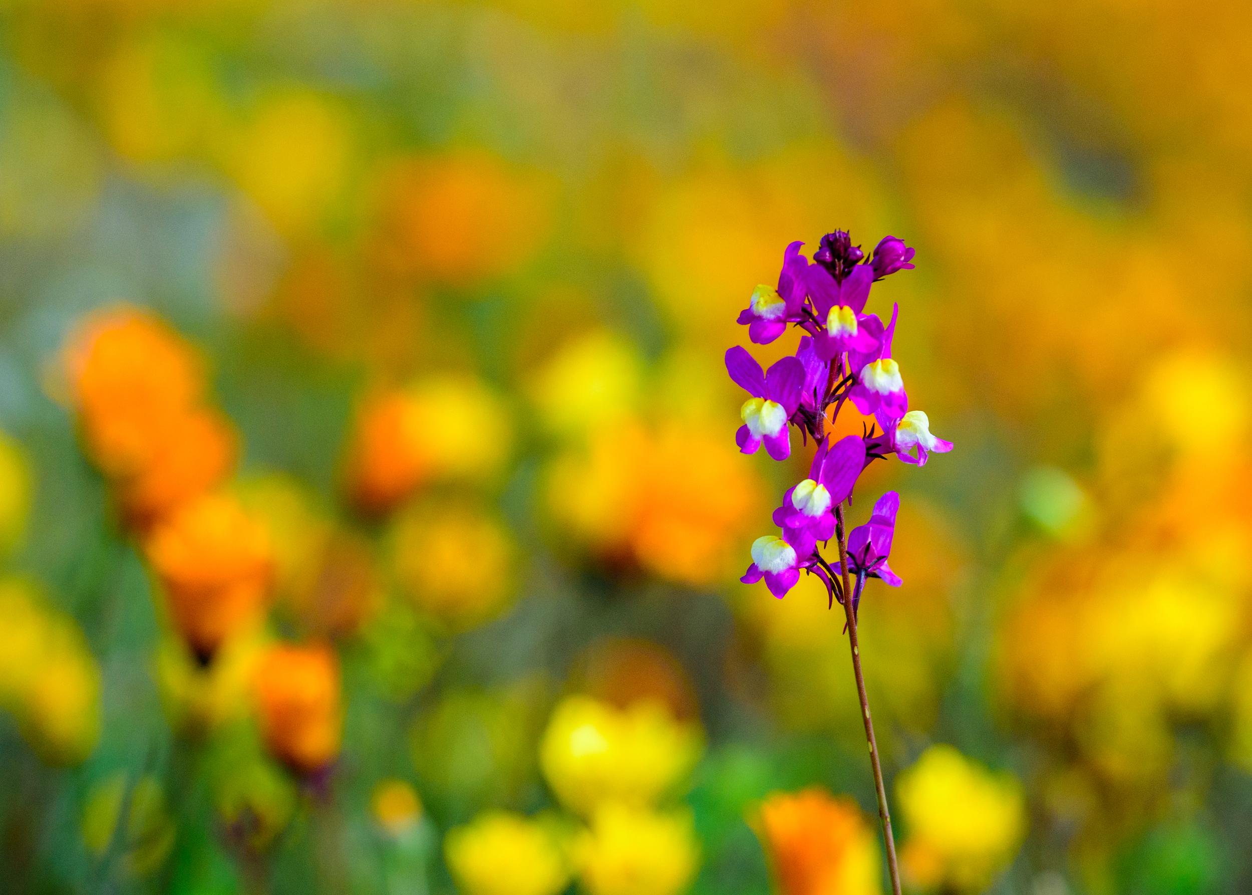 wildflowers-5.jpg