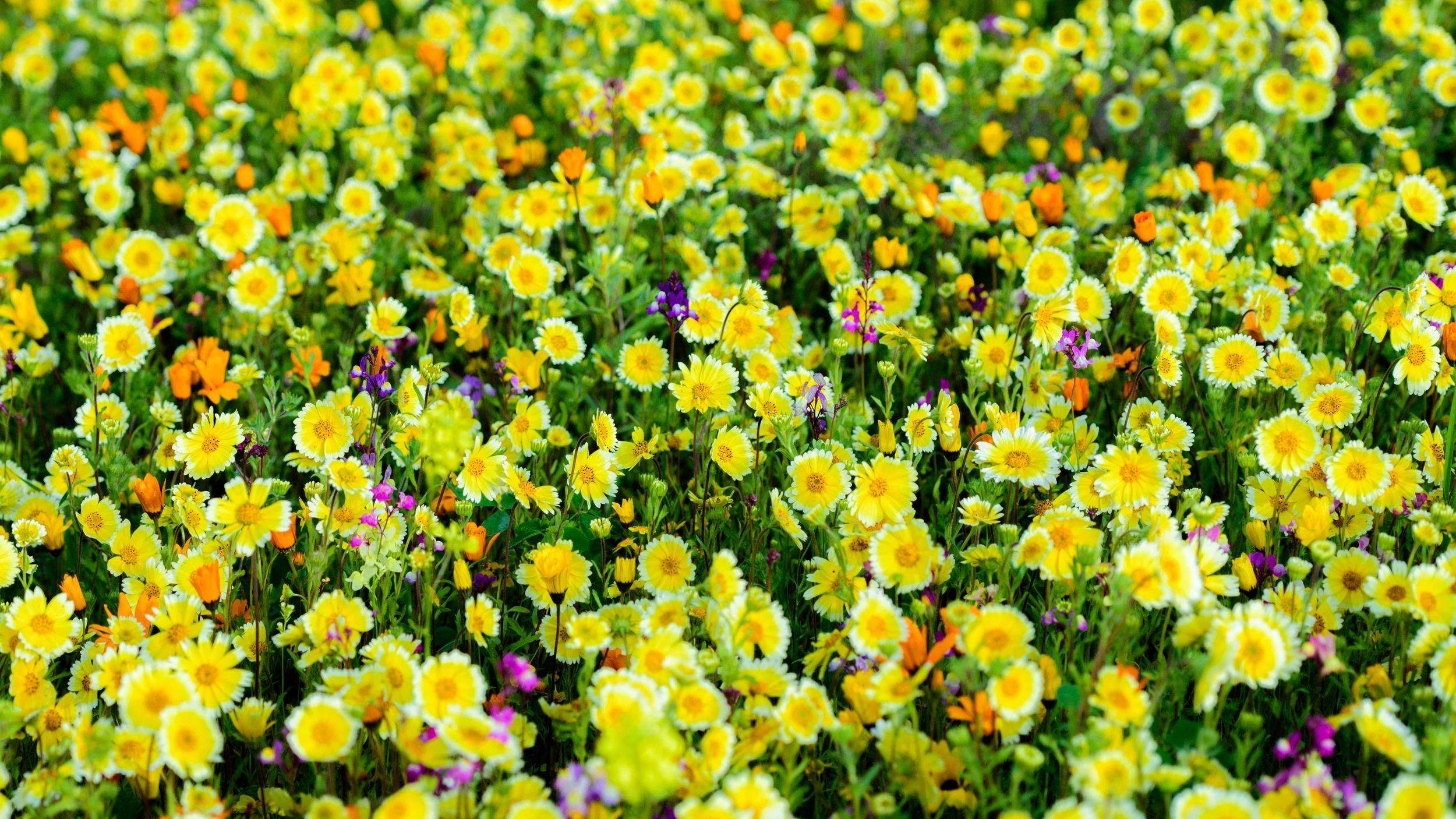 wildflowers-6.jpg