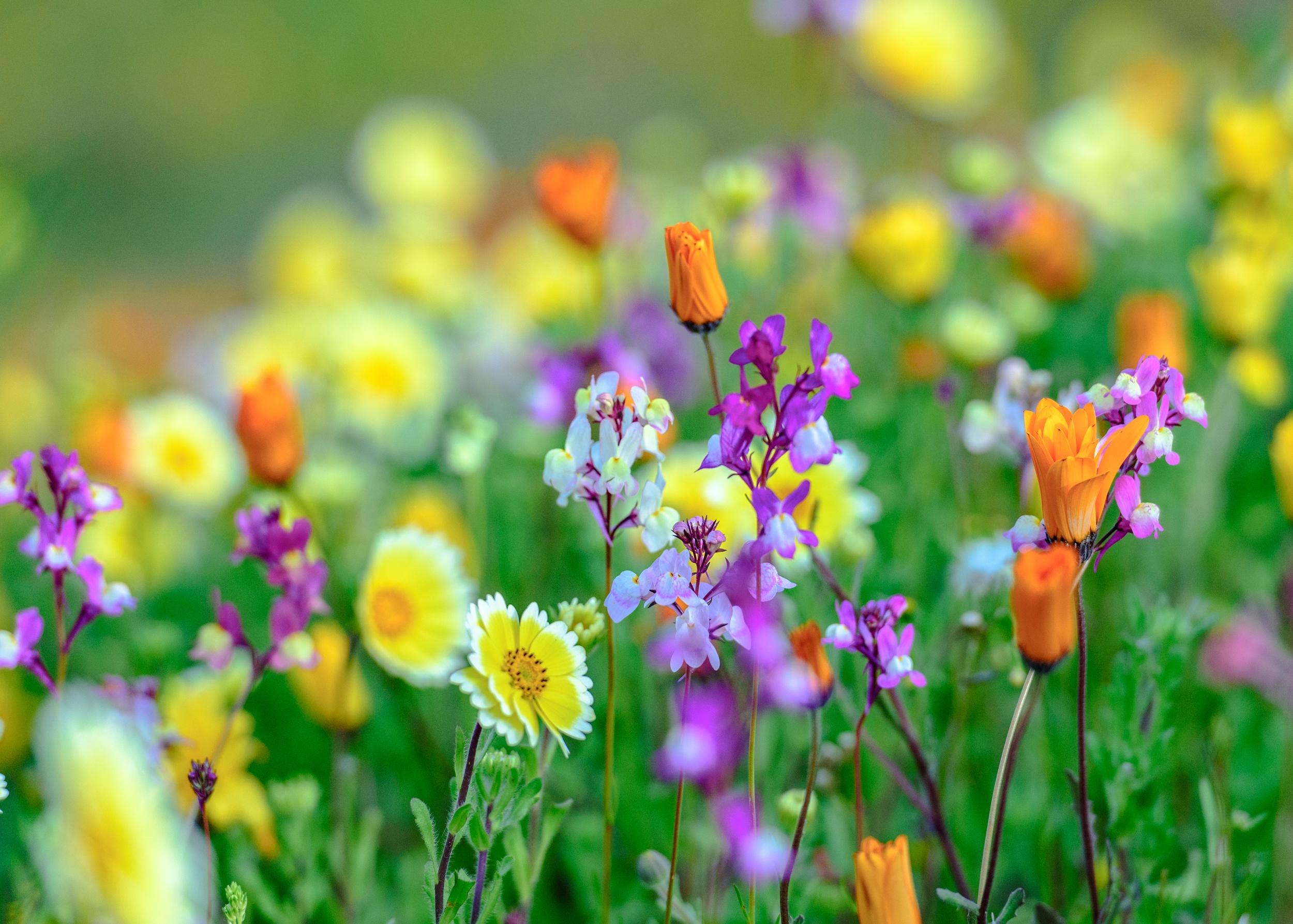 wildflowers-7.jpg