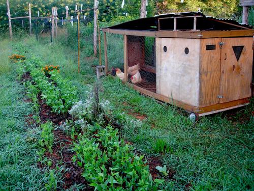Piedmont Biofuels Farm Incubator – mobile chicken coop
