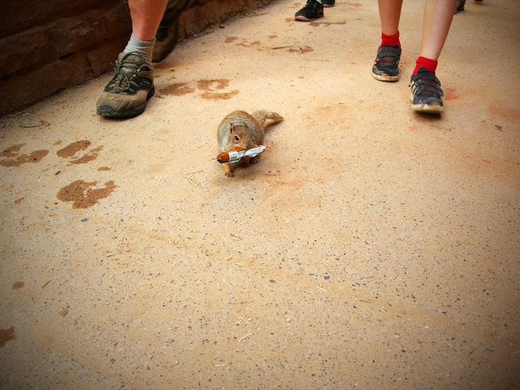 Feeding Frenzy / Zion National Park