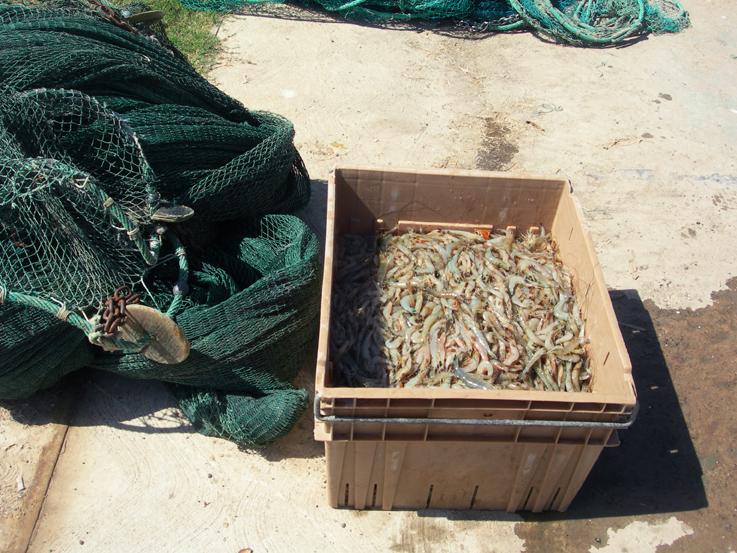 The catch / Galveston Bay, Texas