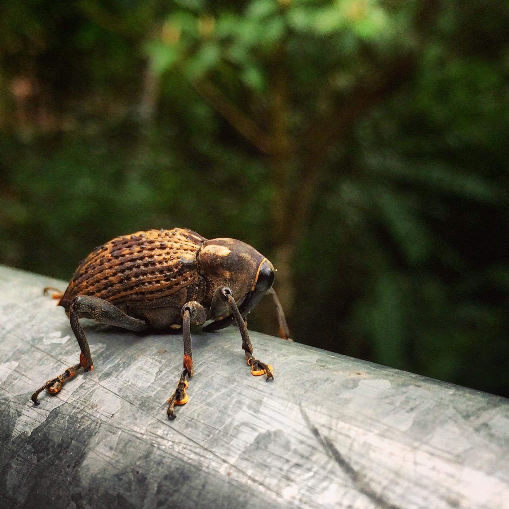 Jungle bug