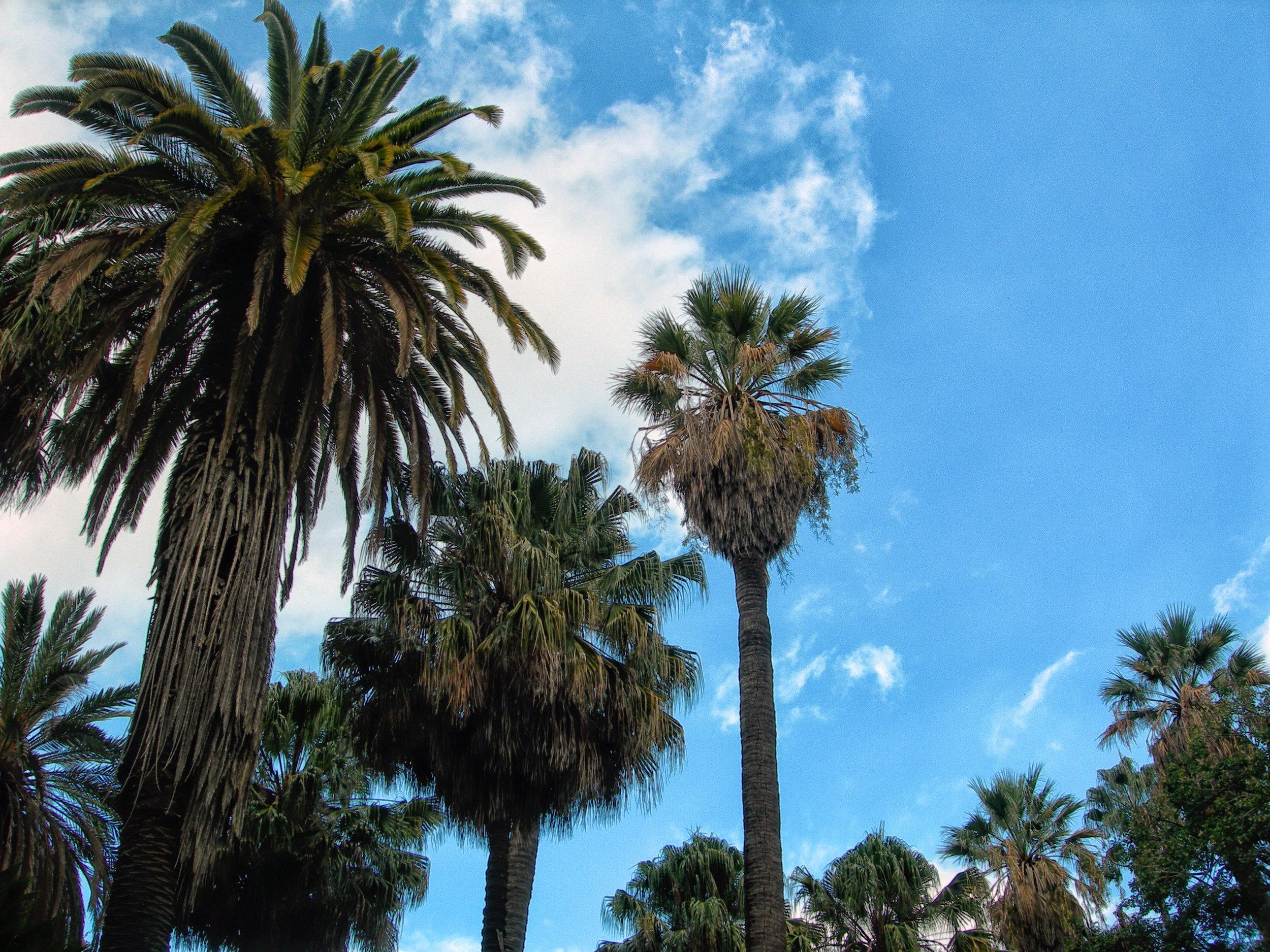 Susannah-Mira_Lisbon-Portugal-palm-trees.JPG