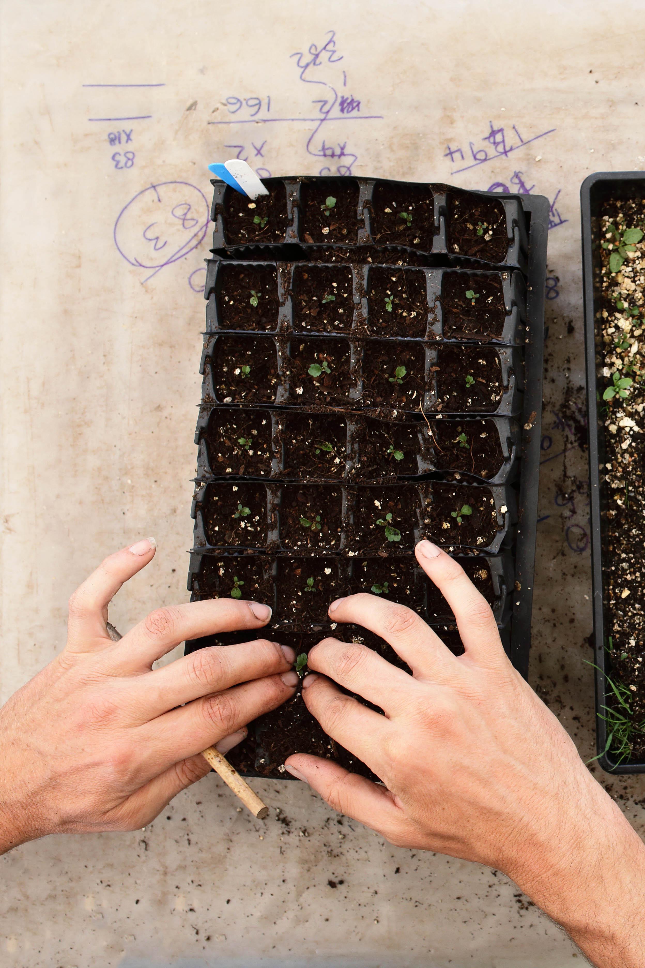 Grid One - Picking Out Seedlings.jpg