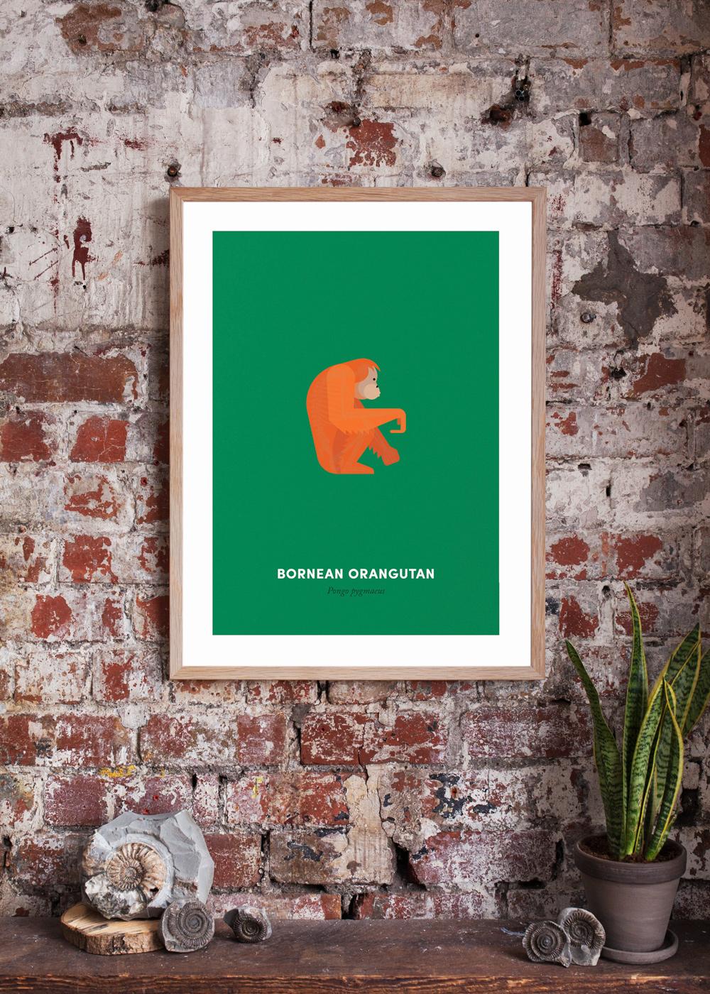 Orangutan-White-Wall-Product-Shot-Cropped2.jpg