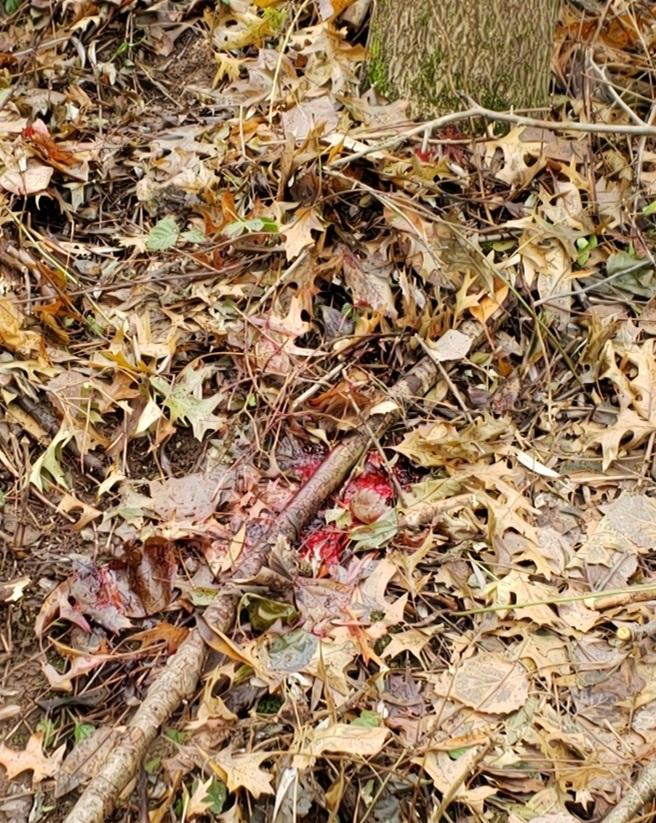The scene of the deer's death.