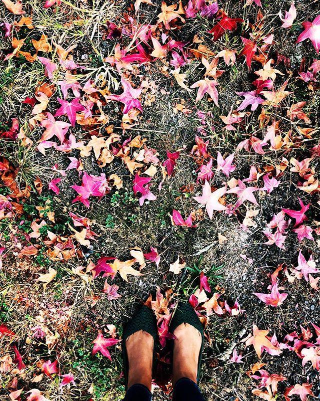 Falling leaves, pumpkin everything, scarves, cozy sweaters, warm colors, crisp air, always grateful 🍁 🎃 🙏🏾🧣🍂