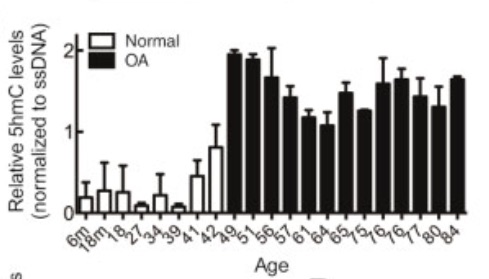 Taylor 2014. Elevation of 5hmC levels in chondrocytes extracted from osteoarthritic cartilage vs. normal cartilage.
