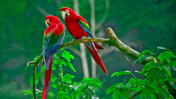 The Future of Parrots