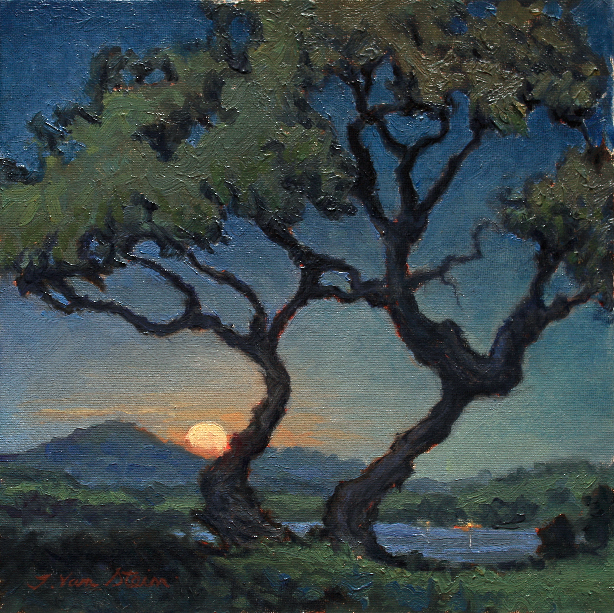 Moonrise through the Oaks,  12x12,  oil on canvas board