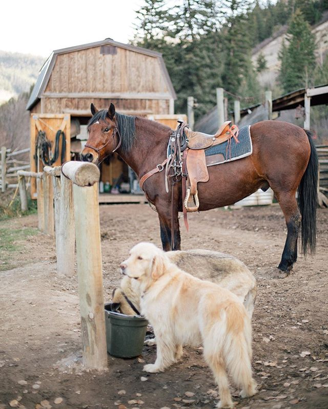 Golden retrievers and a beautiful horse. I mean, can this photo get any better?