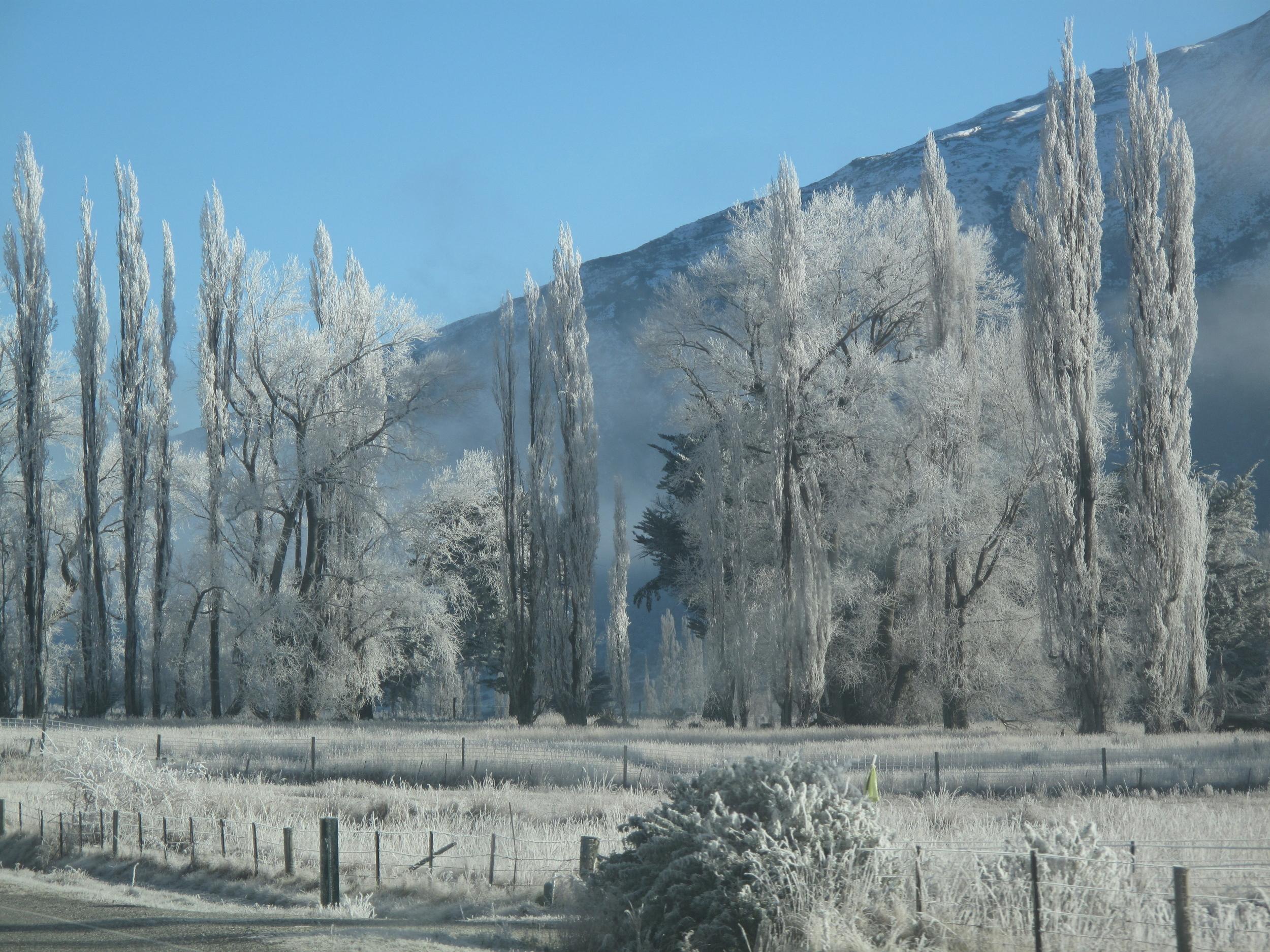 hoar frost Queenstown New Zealand