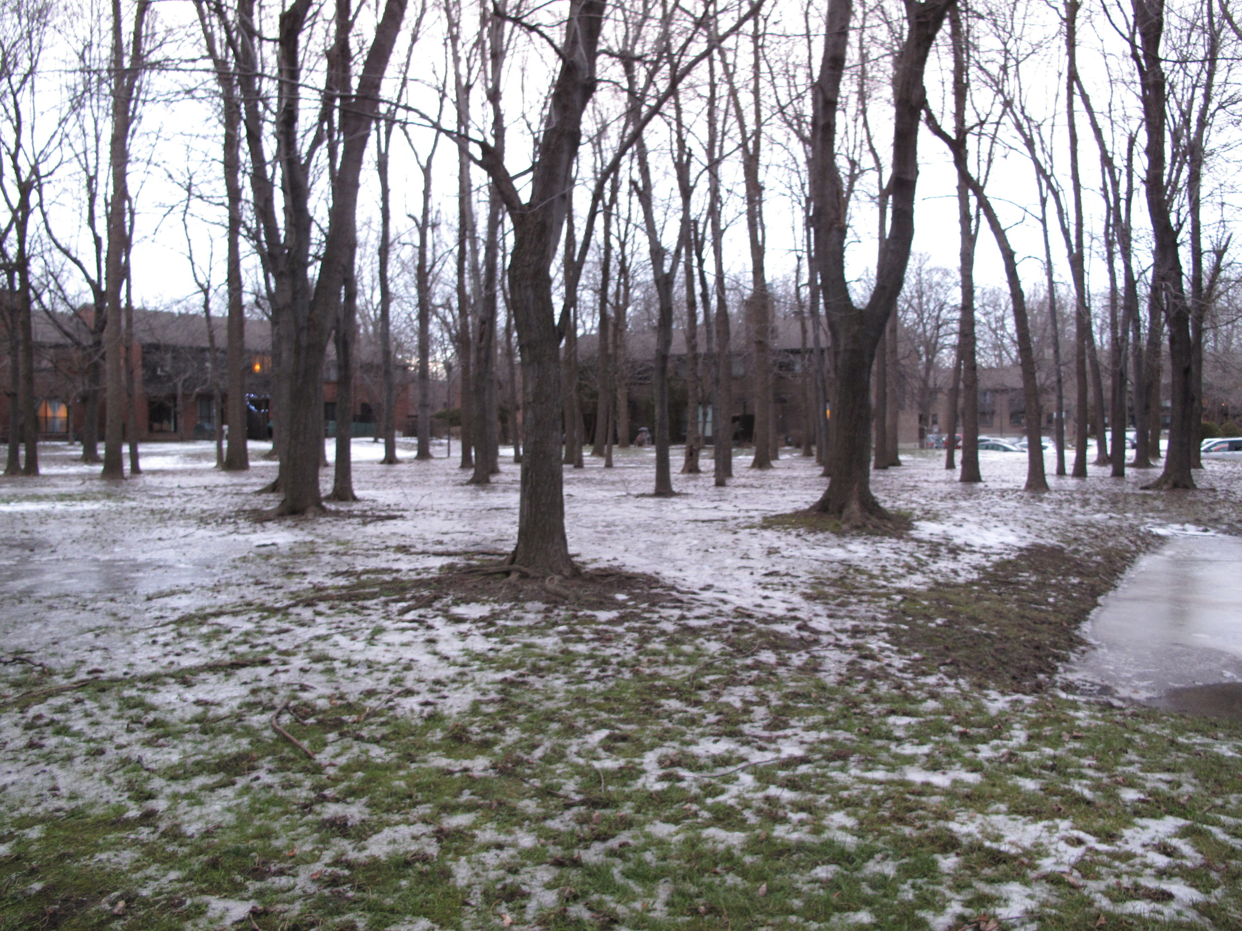 trees and ice and apartments