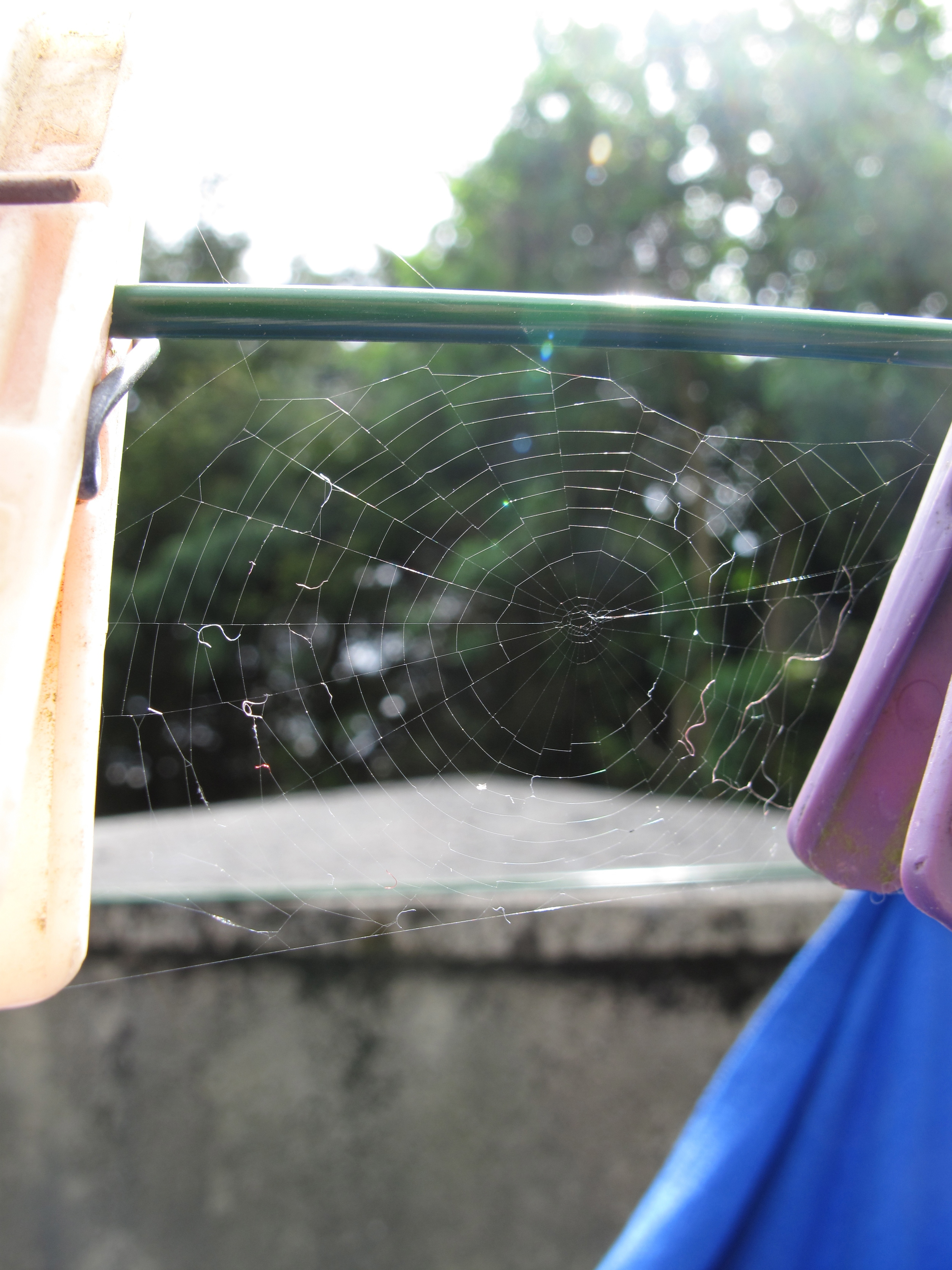 spider web on clothes line