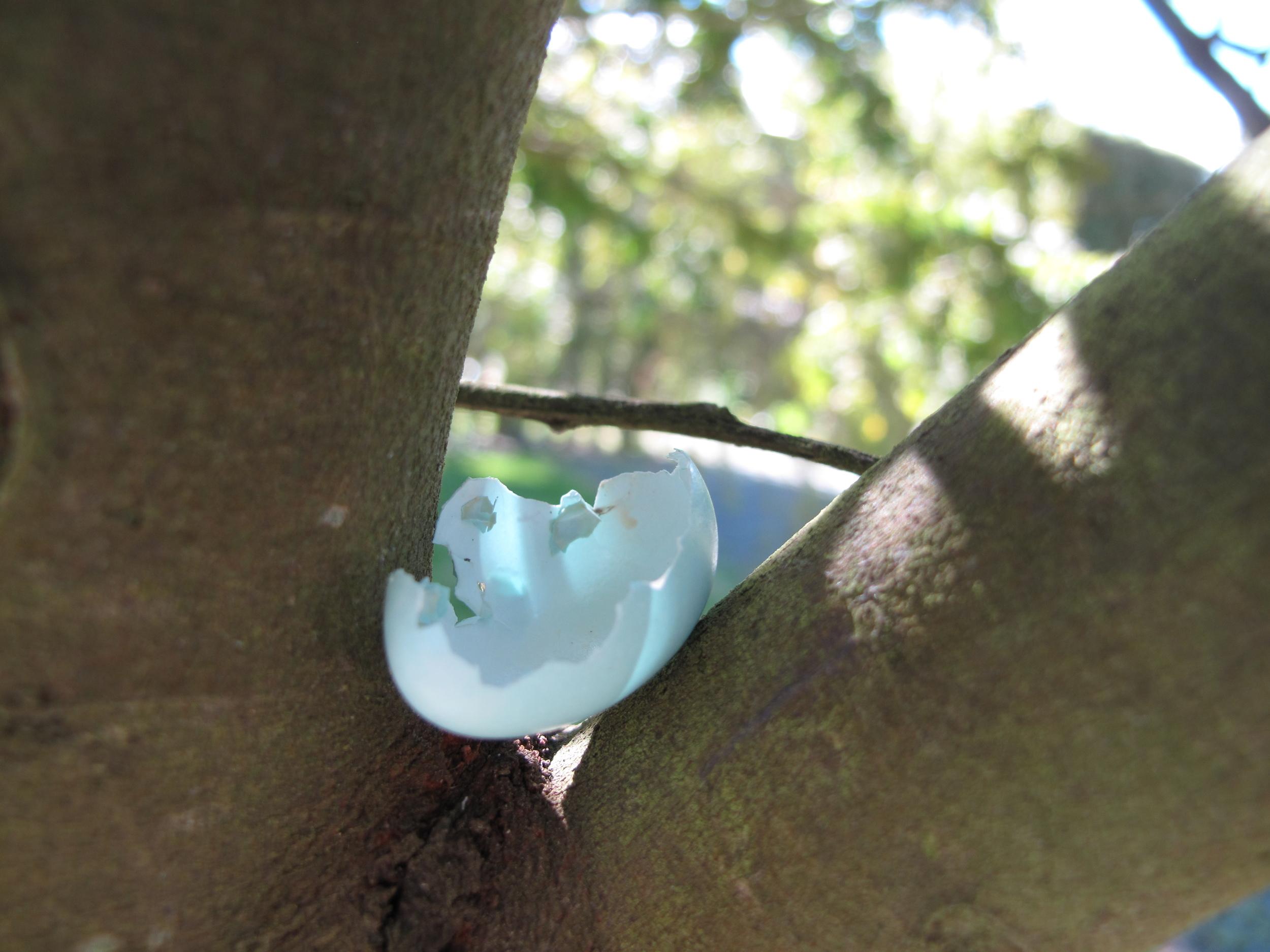 bird's egg in tree