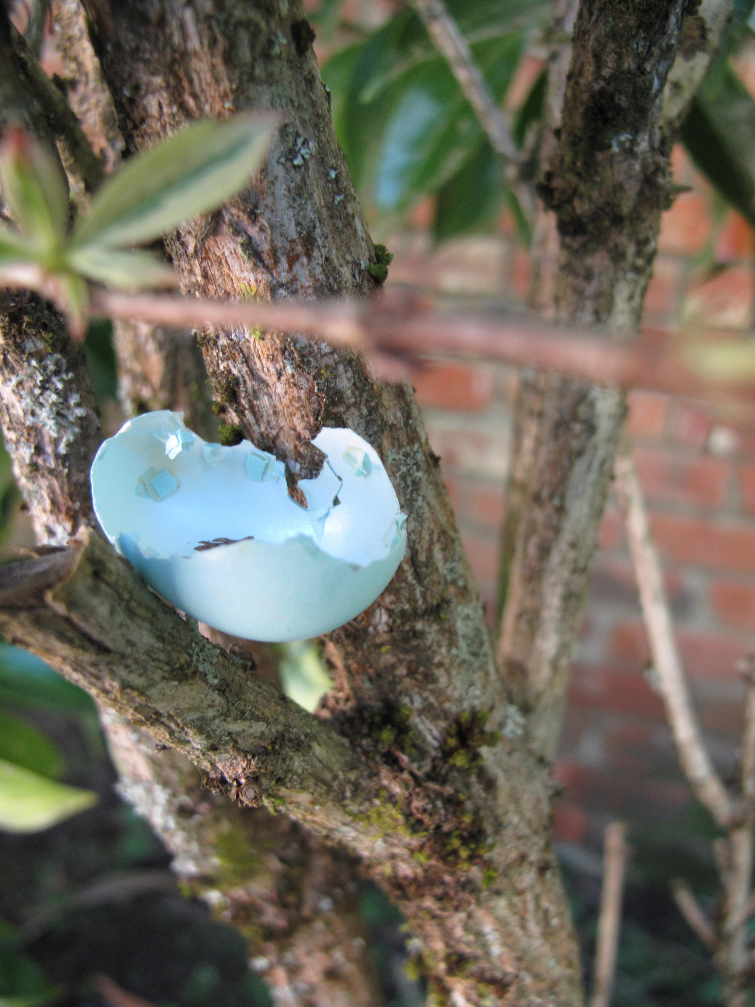 blue bird's egg in tree