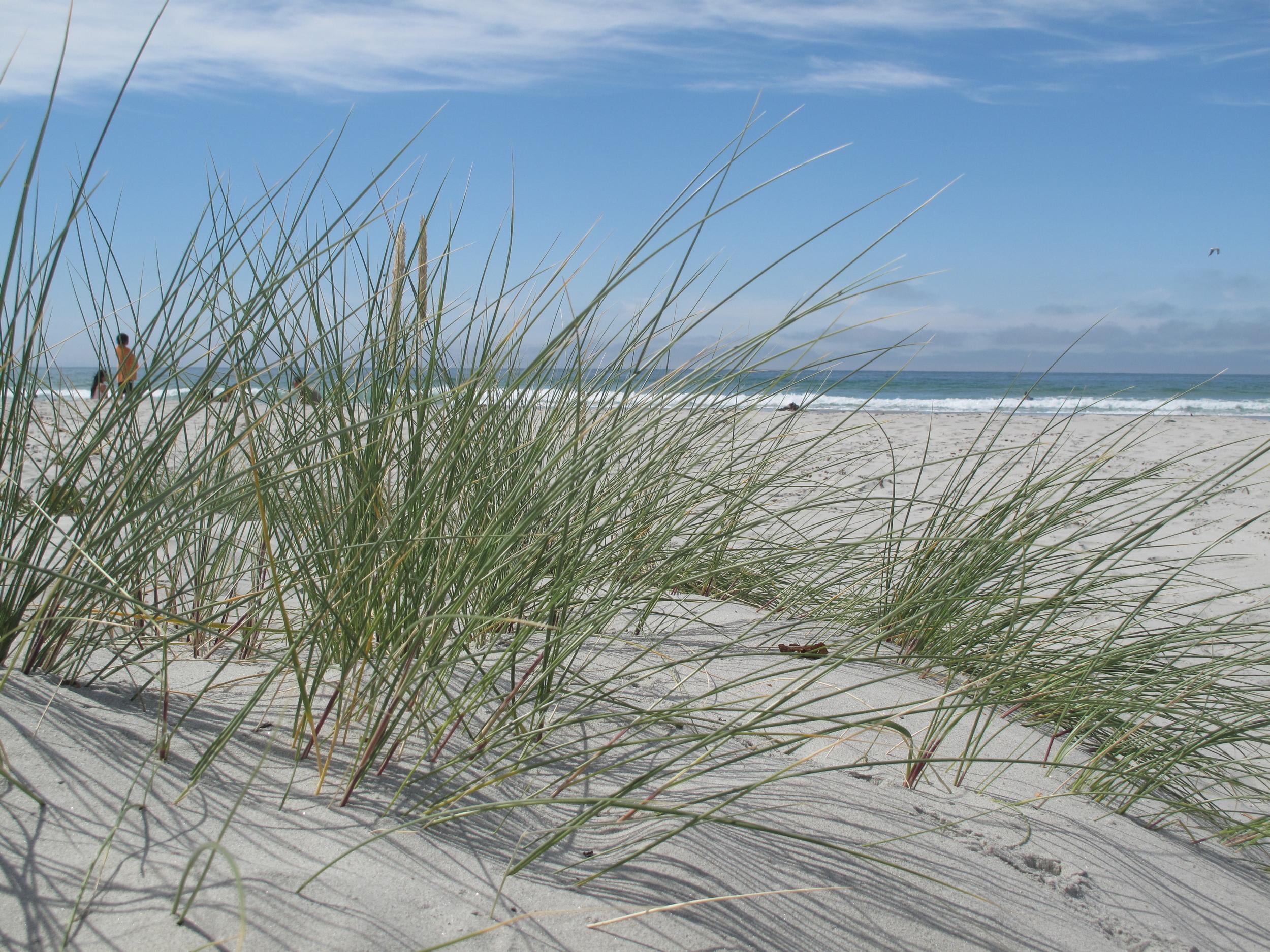Sand dunes at a Dunedin beach