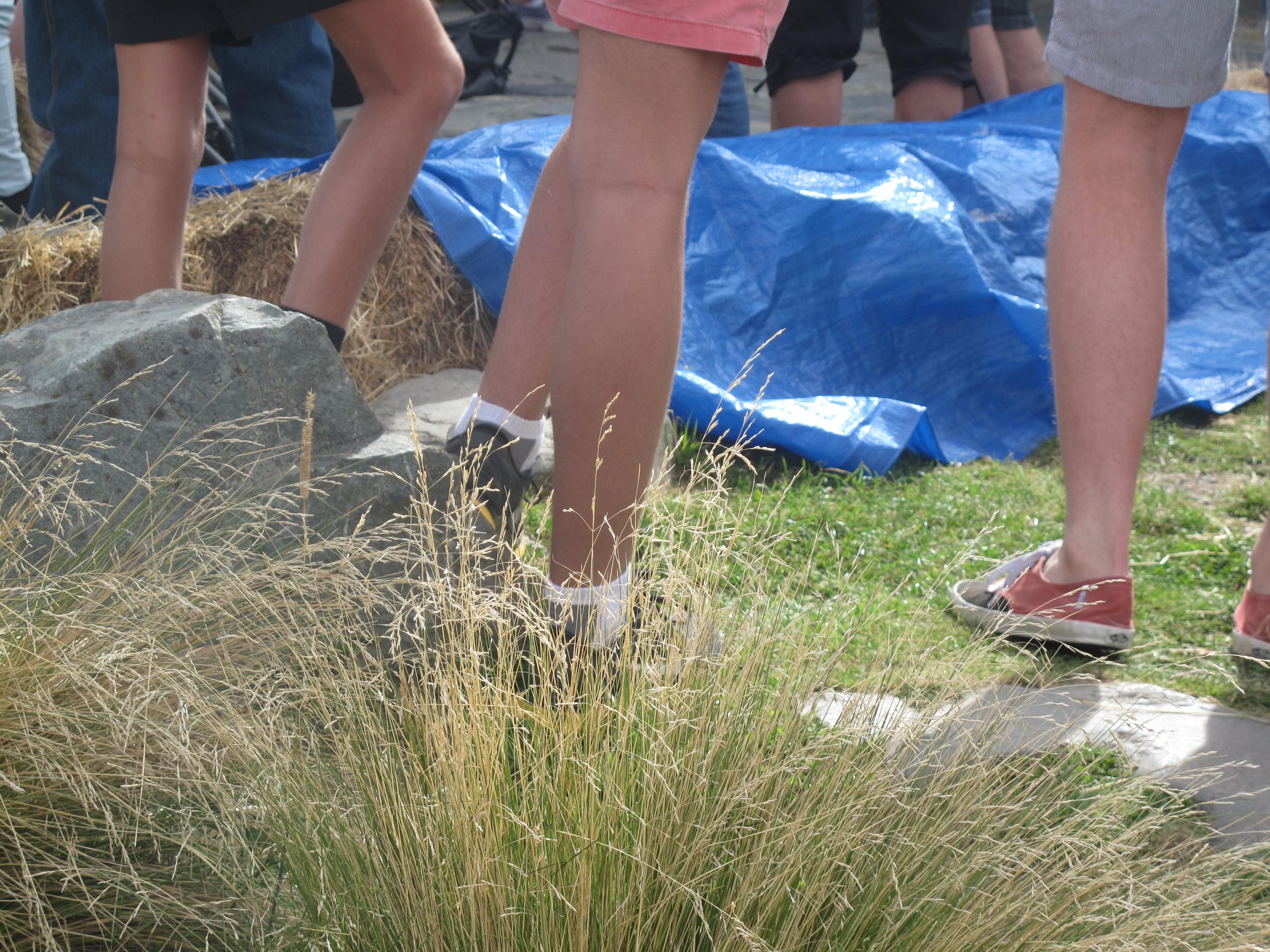stubbies shorts New Zealand