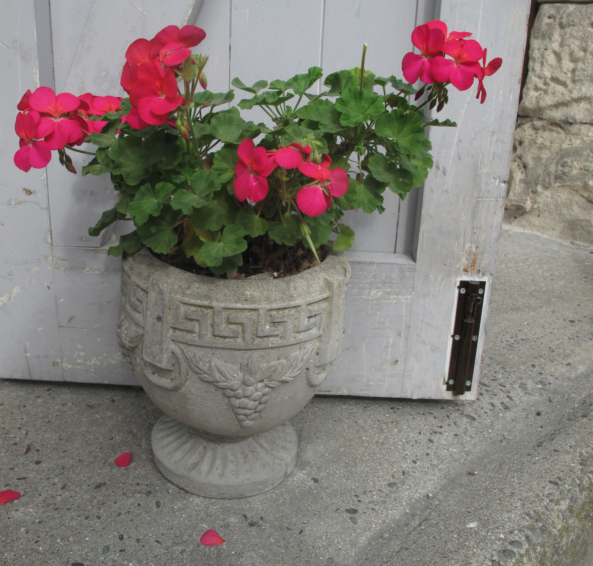Oamaru victorian area - flowerpot and stone steps