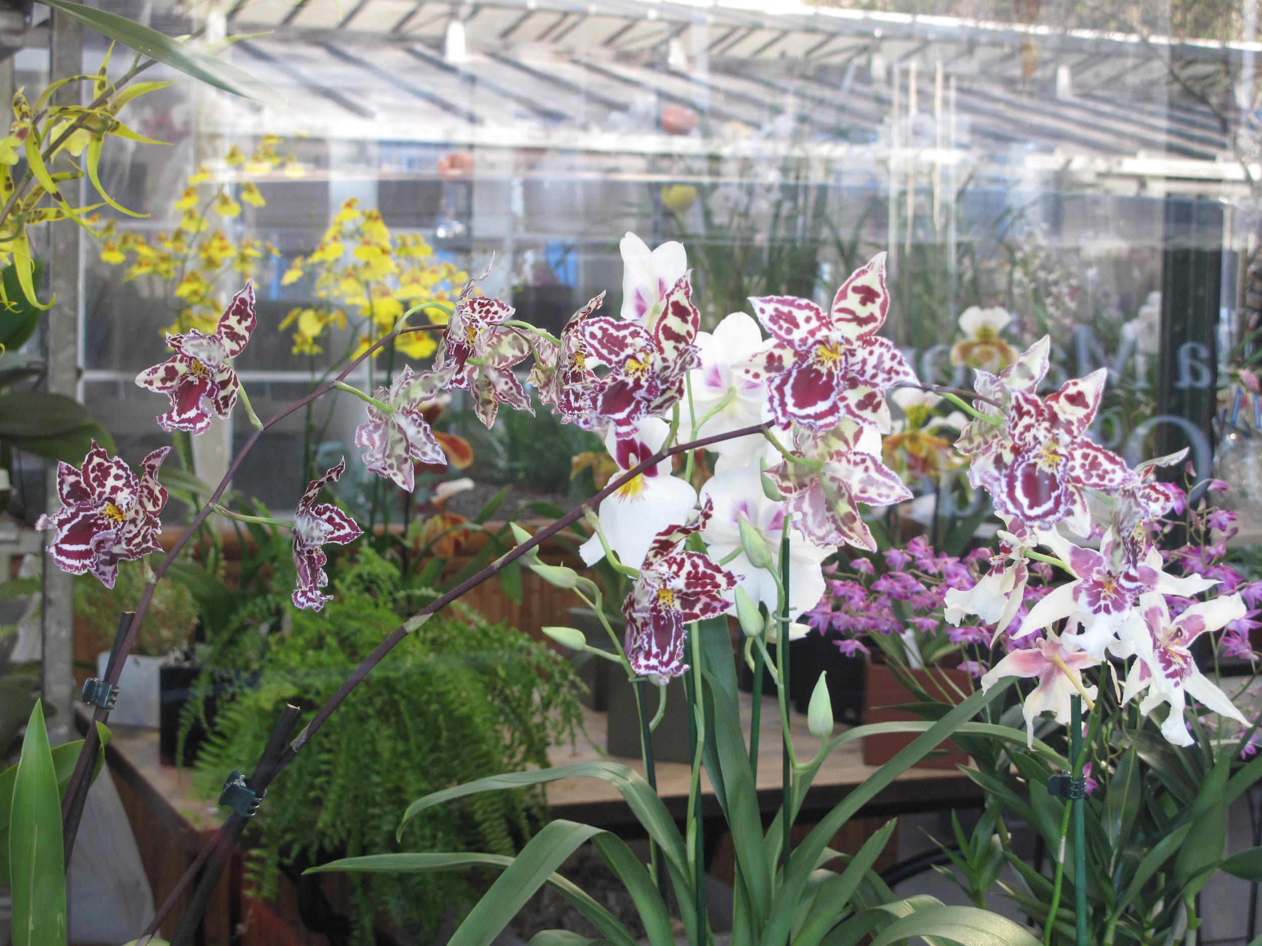 Purple orchids in a market on the Île de la Cité of Paris