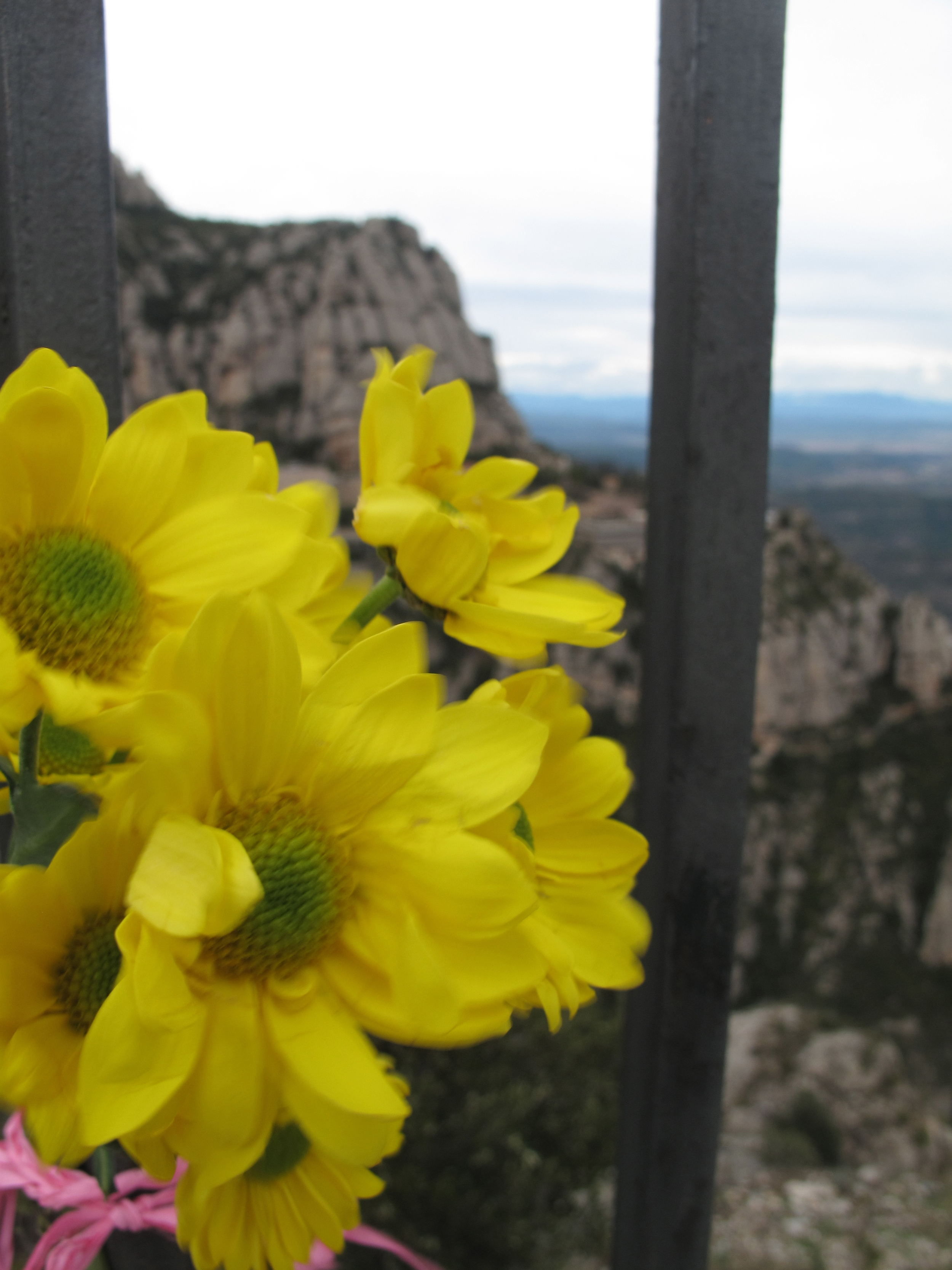 Yellow flowers near the cross, tied to the railings on the mountain of Montserrat