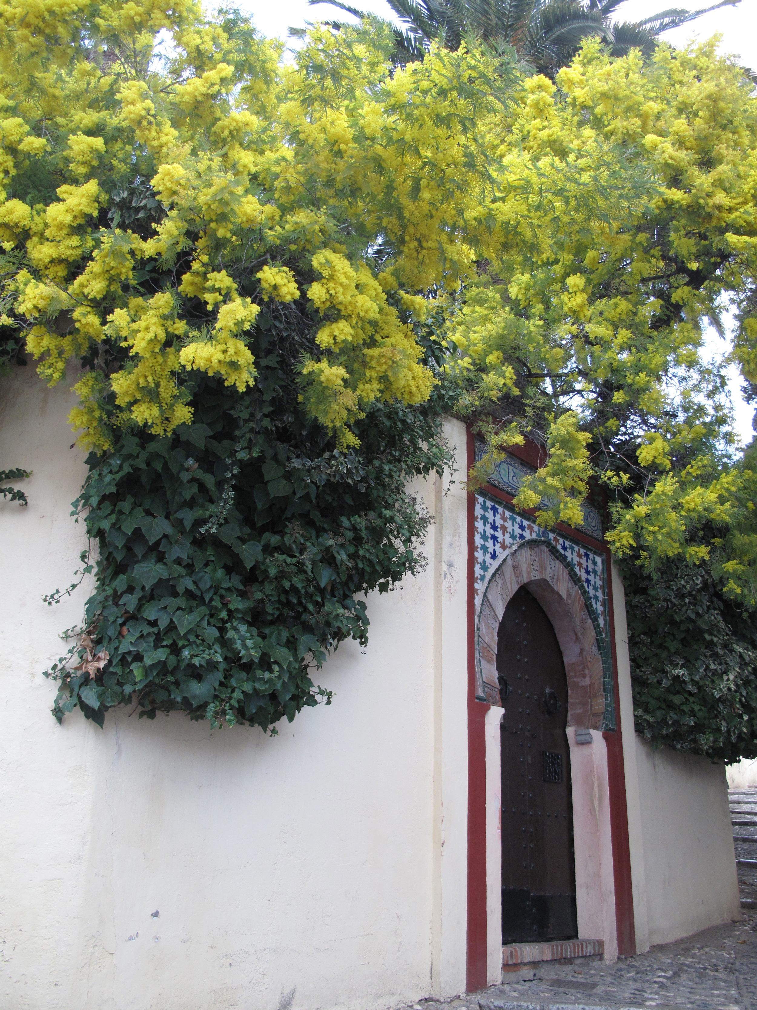 White walls and yellow flowers and an oriental door