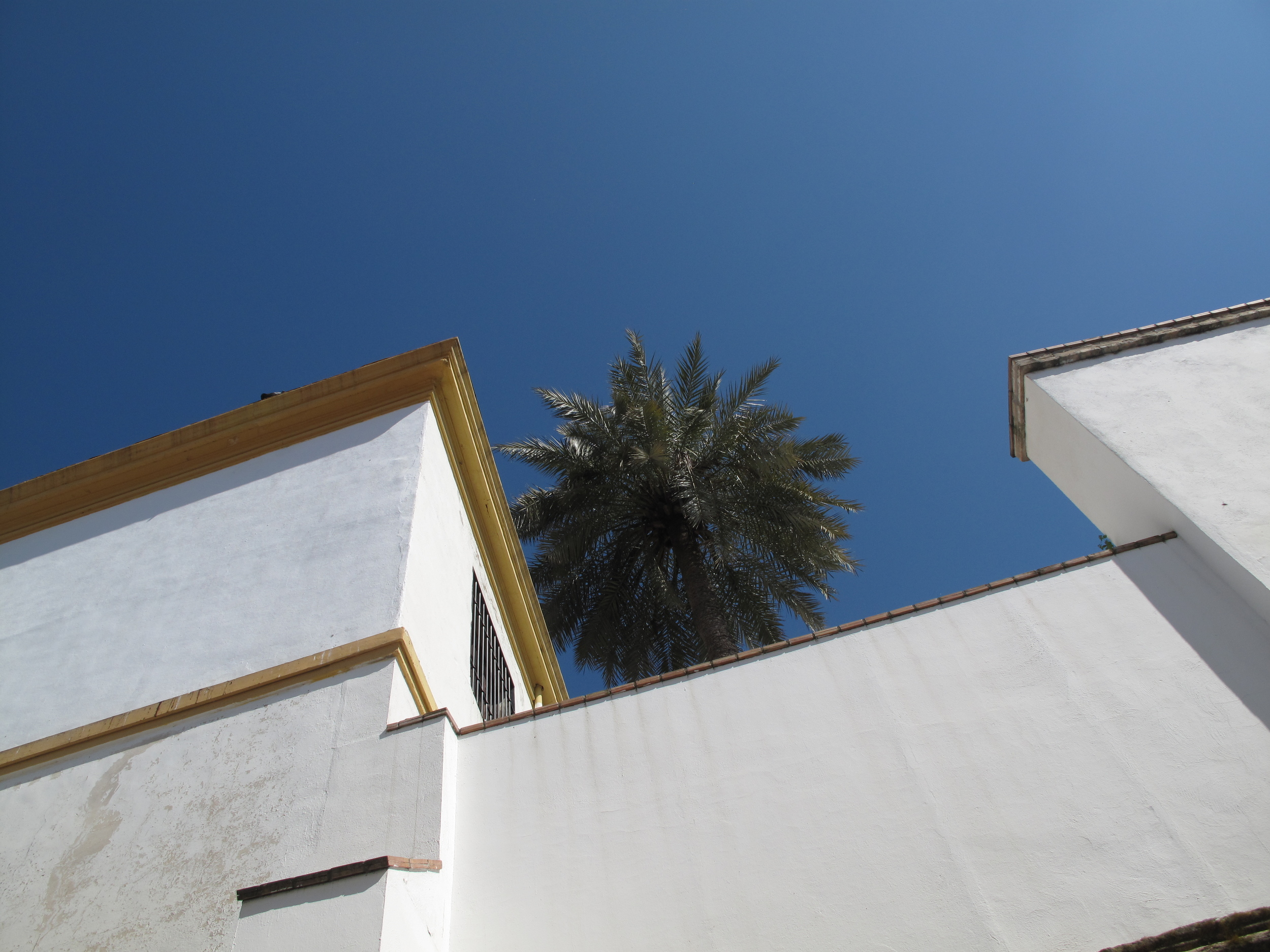 Date trees and white walled buildings