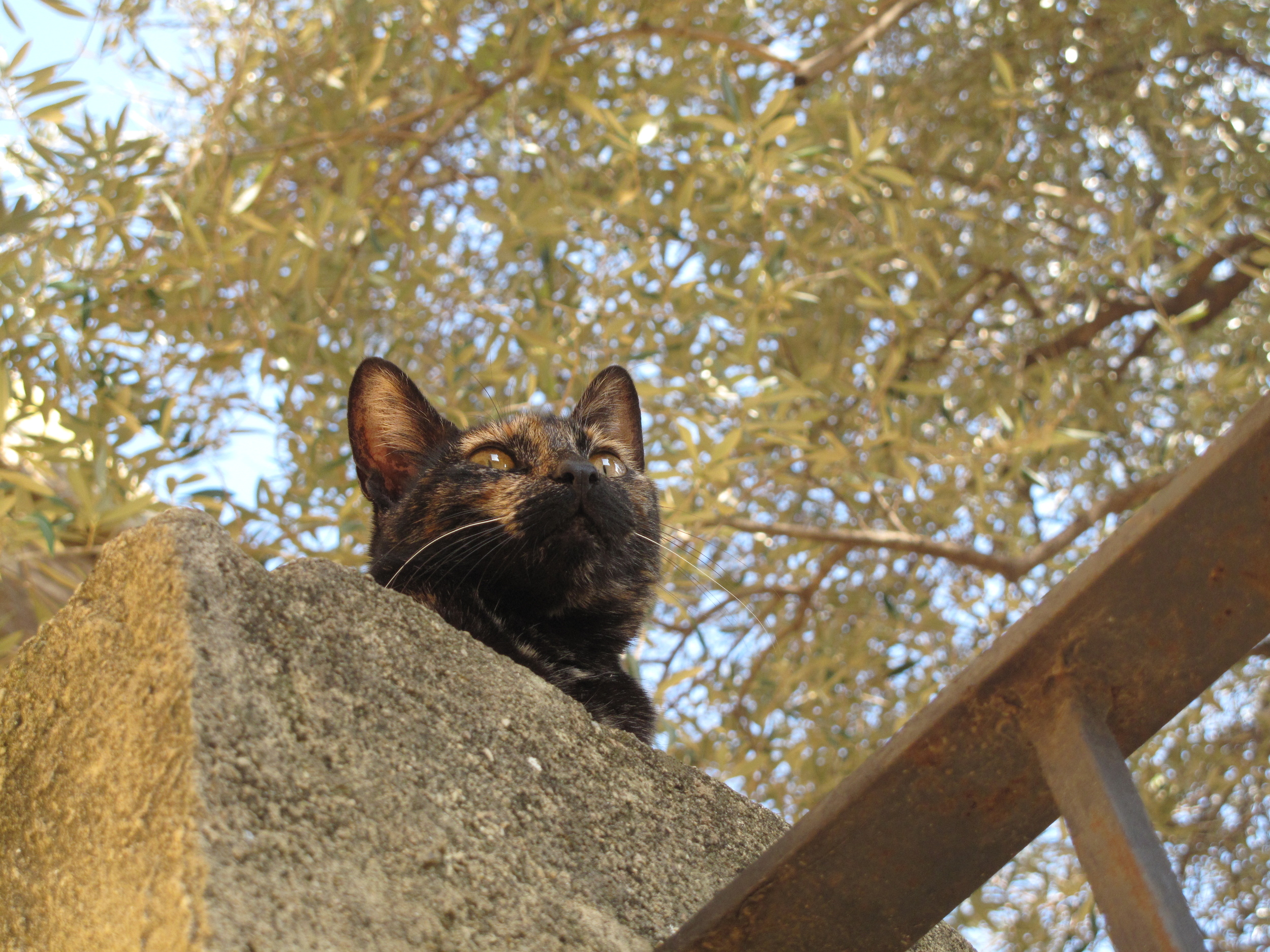 A green eyed tortoiseshell cat sitting on a wall at the castle