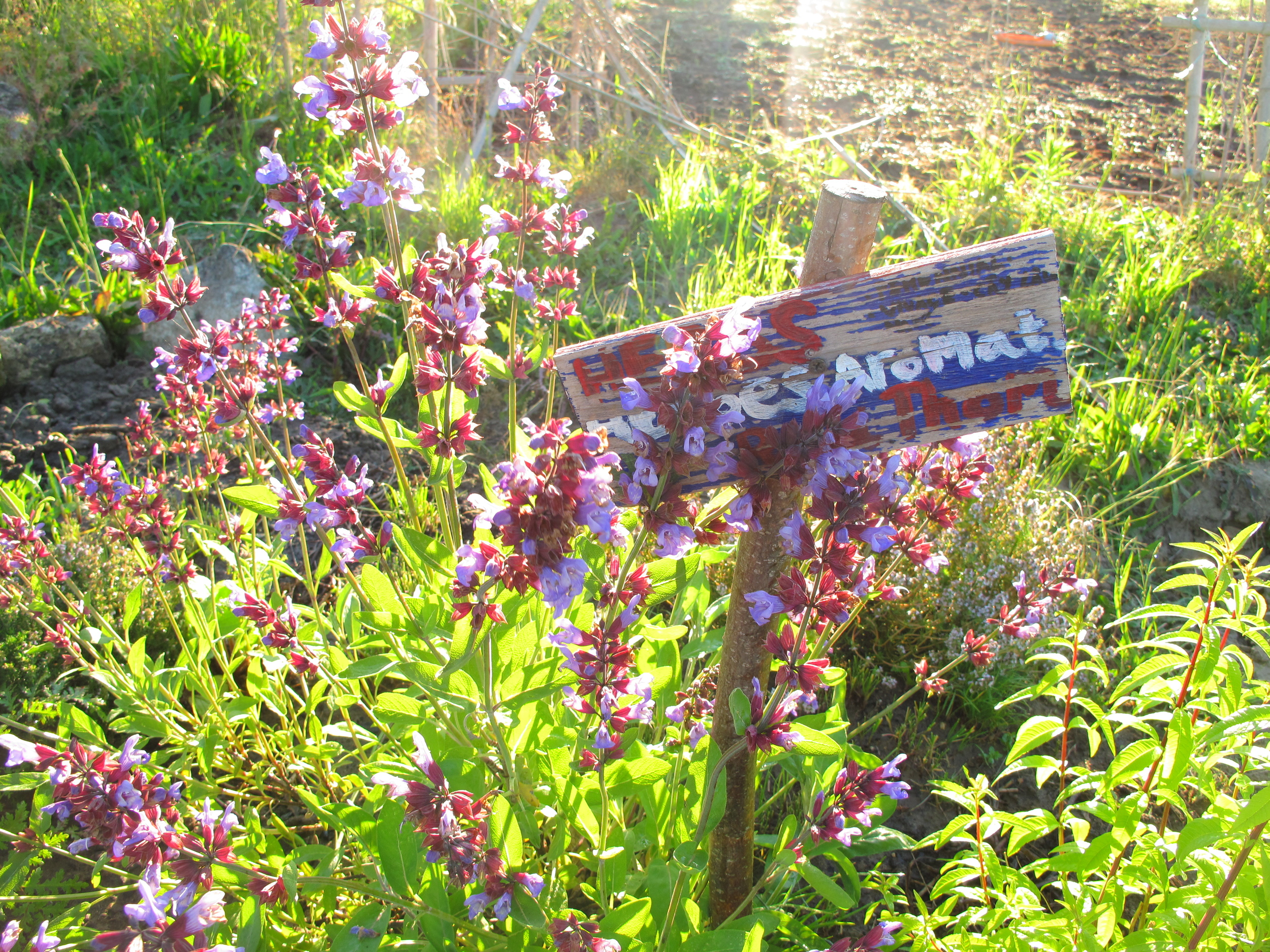Plants in the garden of plum village in the morning light