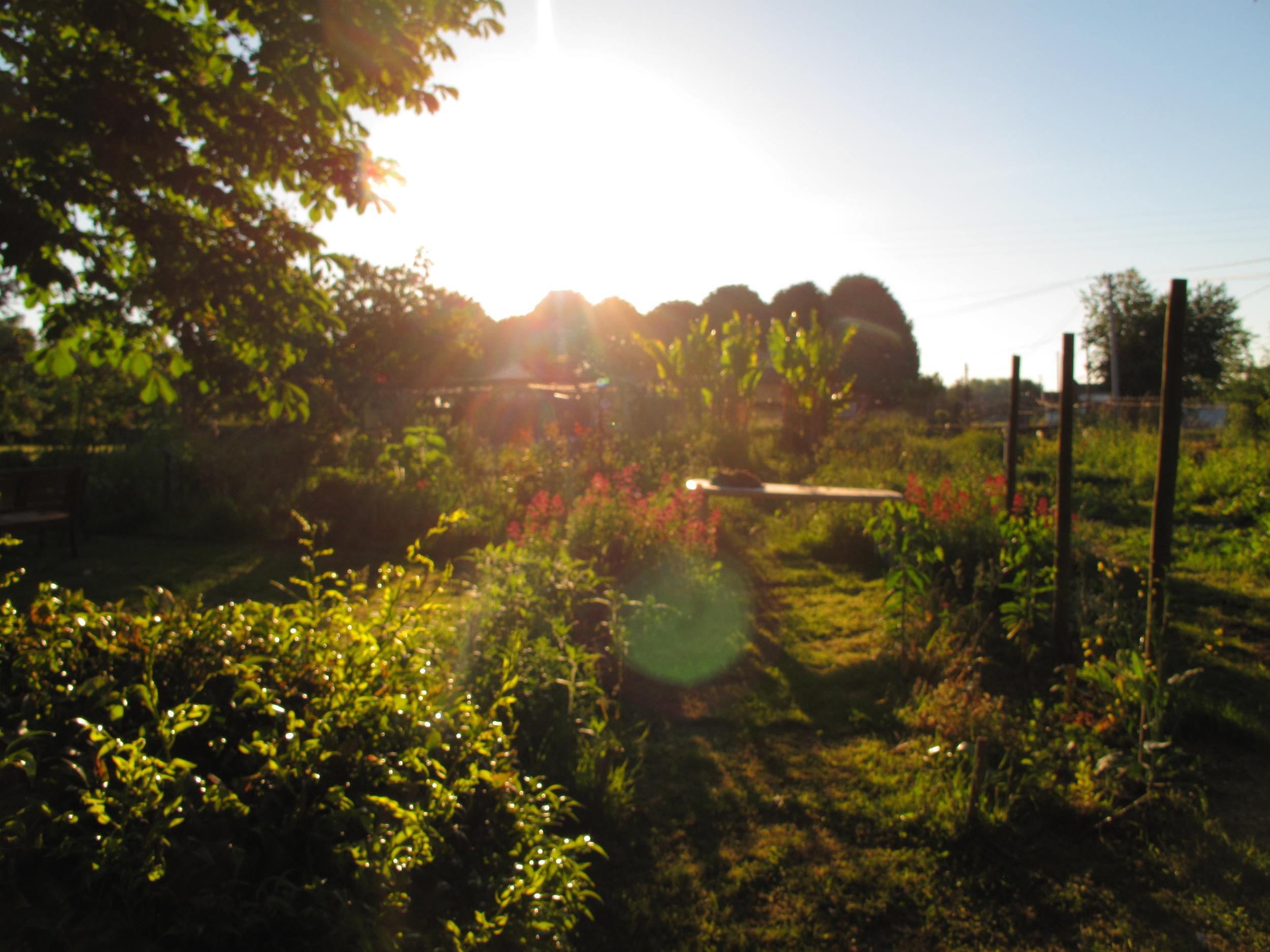 Sunspots filtering through trees at Plum Village hamlet