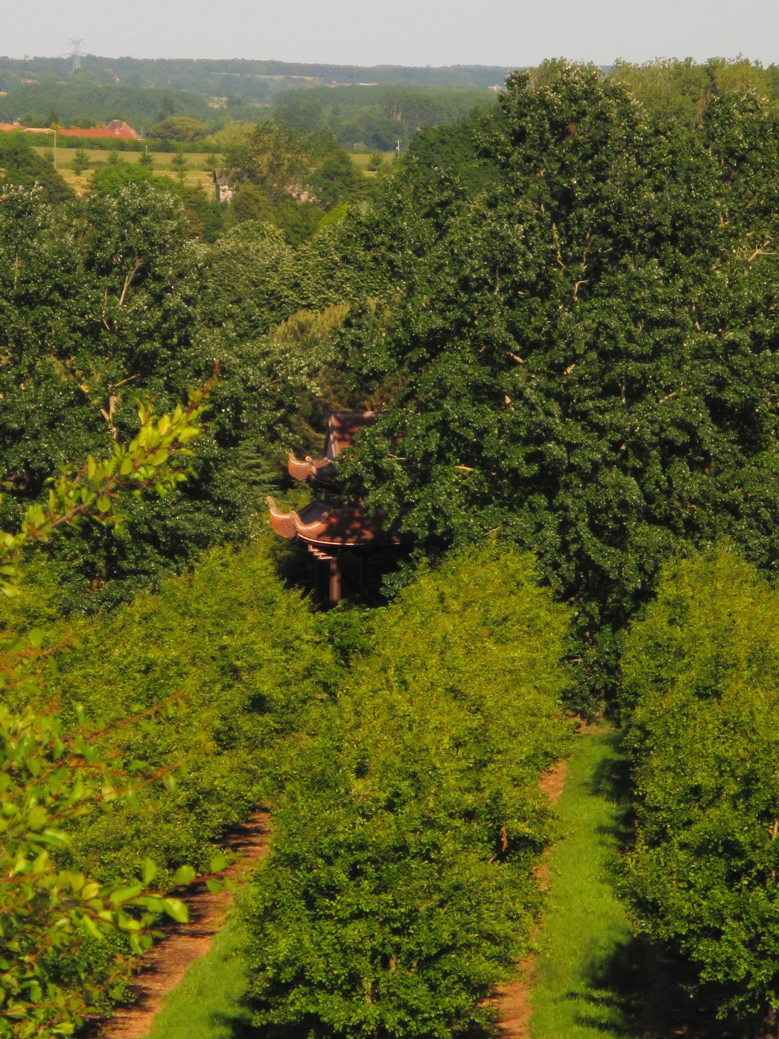 The orchard at Plum Village, with a pagoda roof peeking through the trees