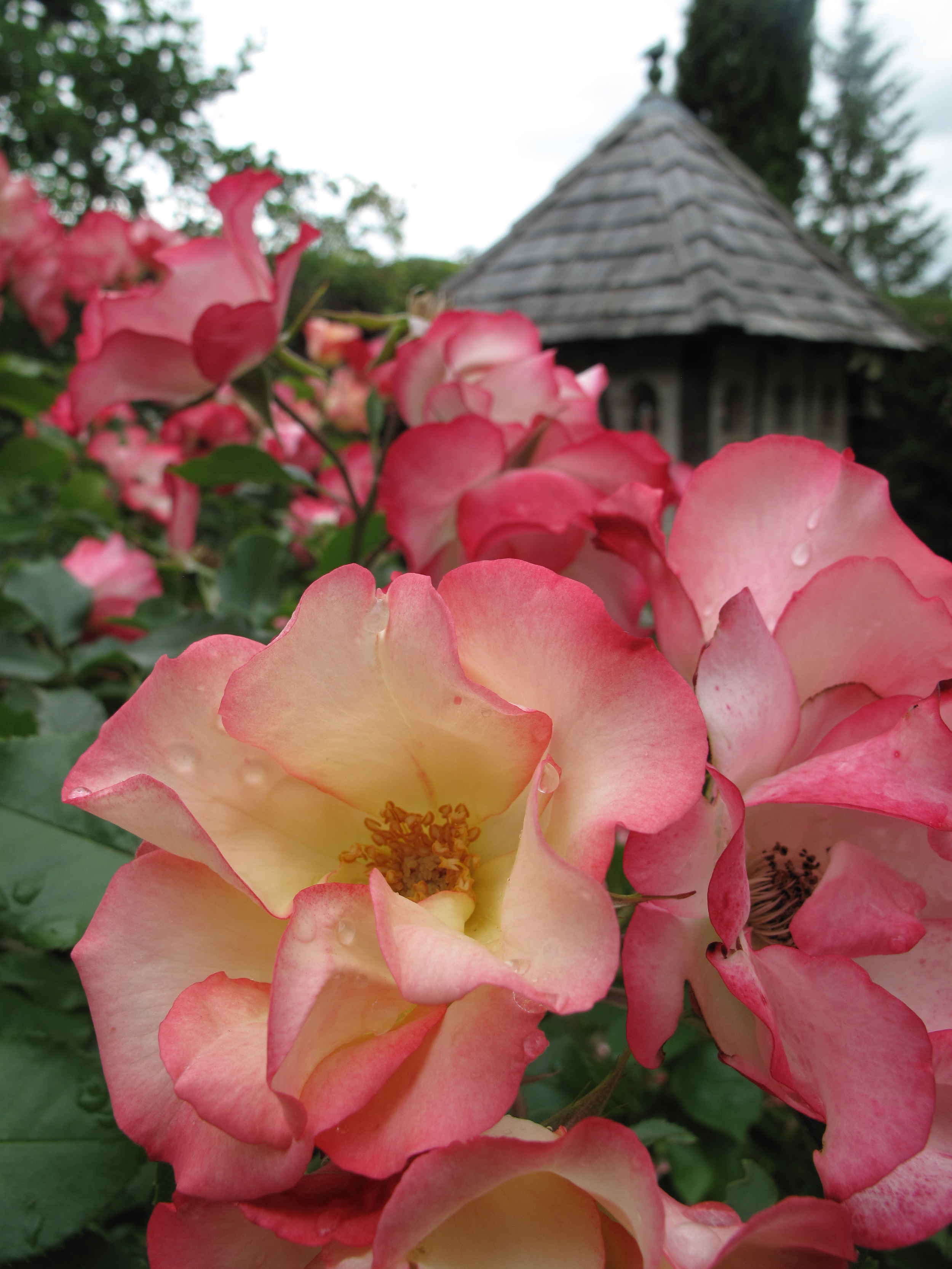 Roses and cute little wooden houses at the Jardin de Boissonna