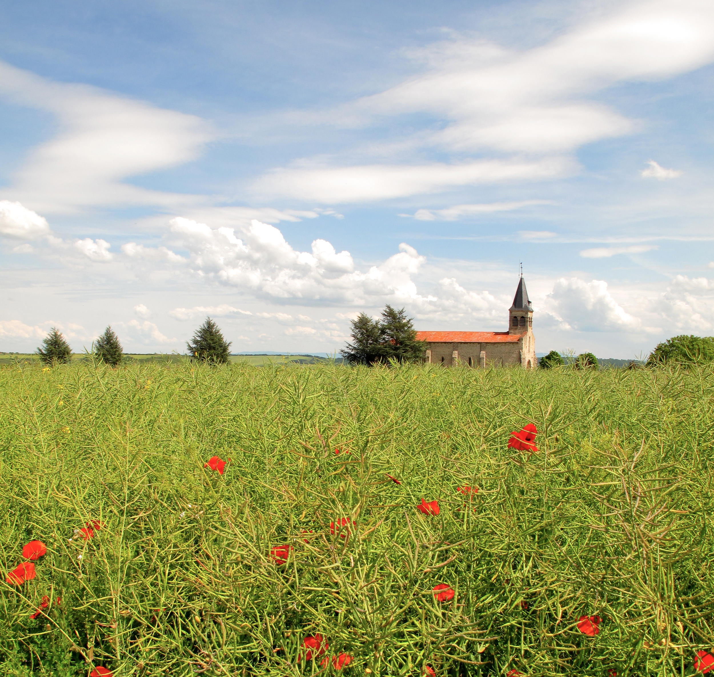 A small church in fields of poppies, Auvergne, France