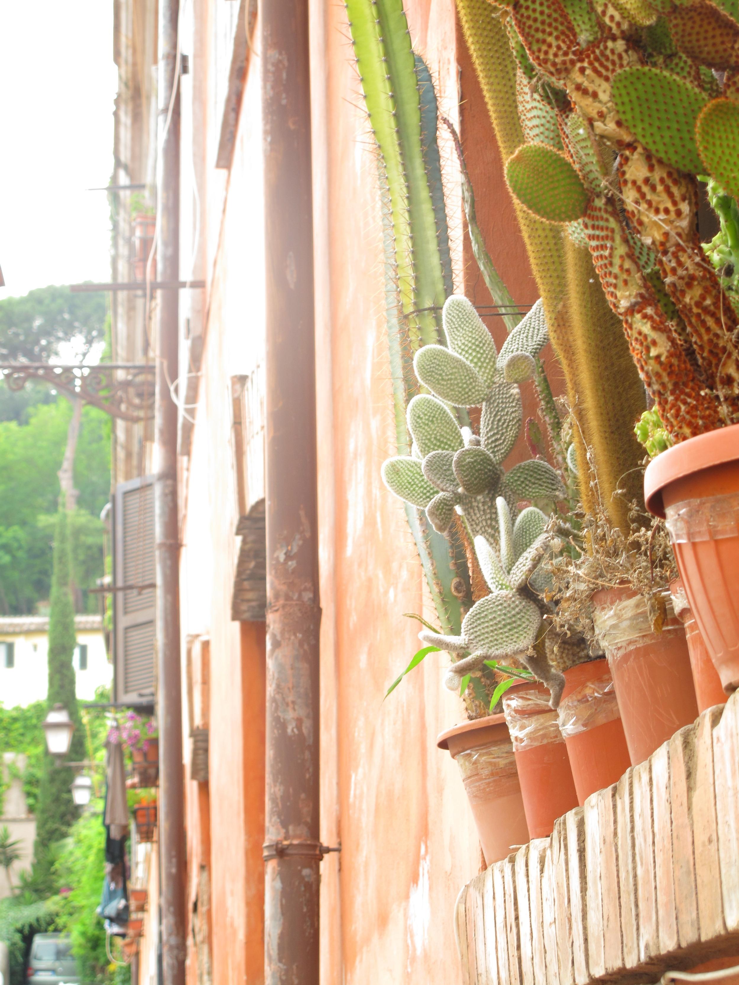 Cacti on a terracotta windowsill in Rome