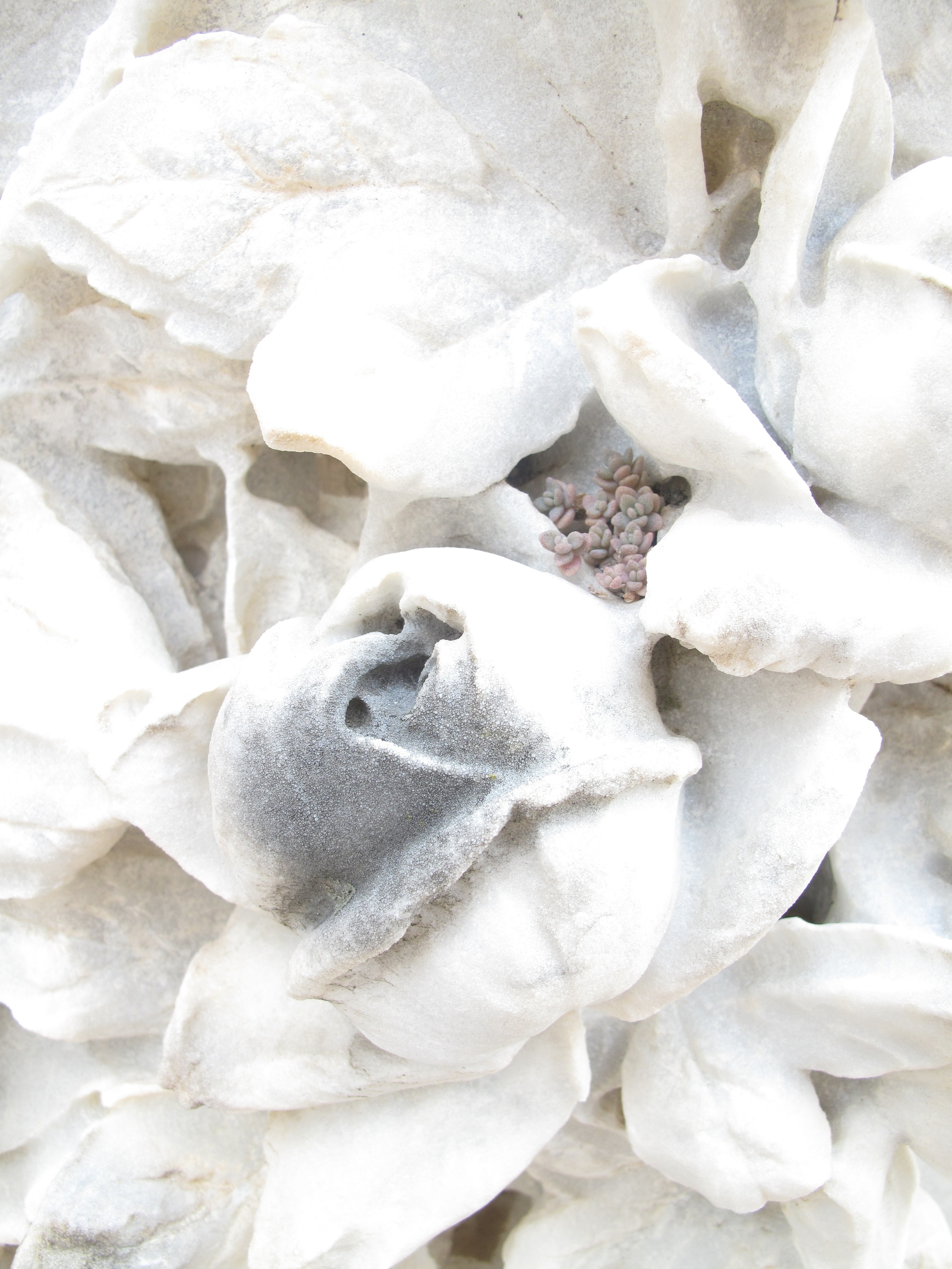 White stone flower carvings and small succulent plant