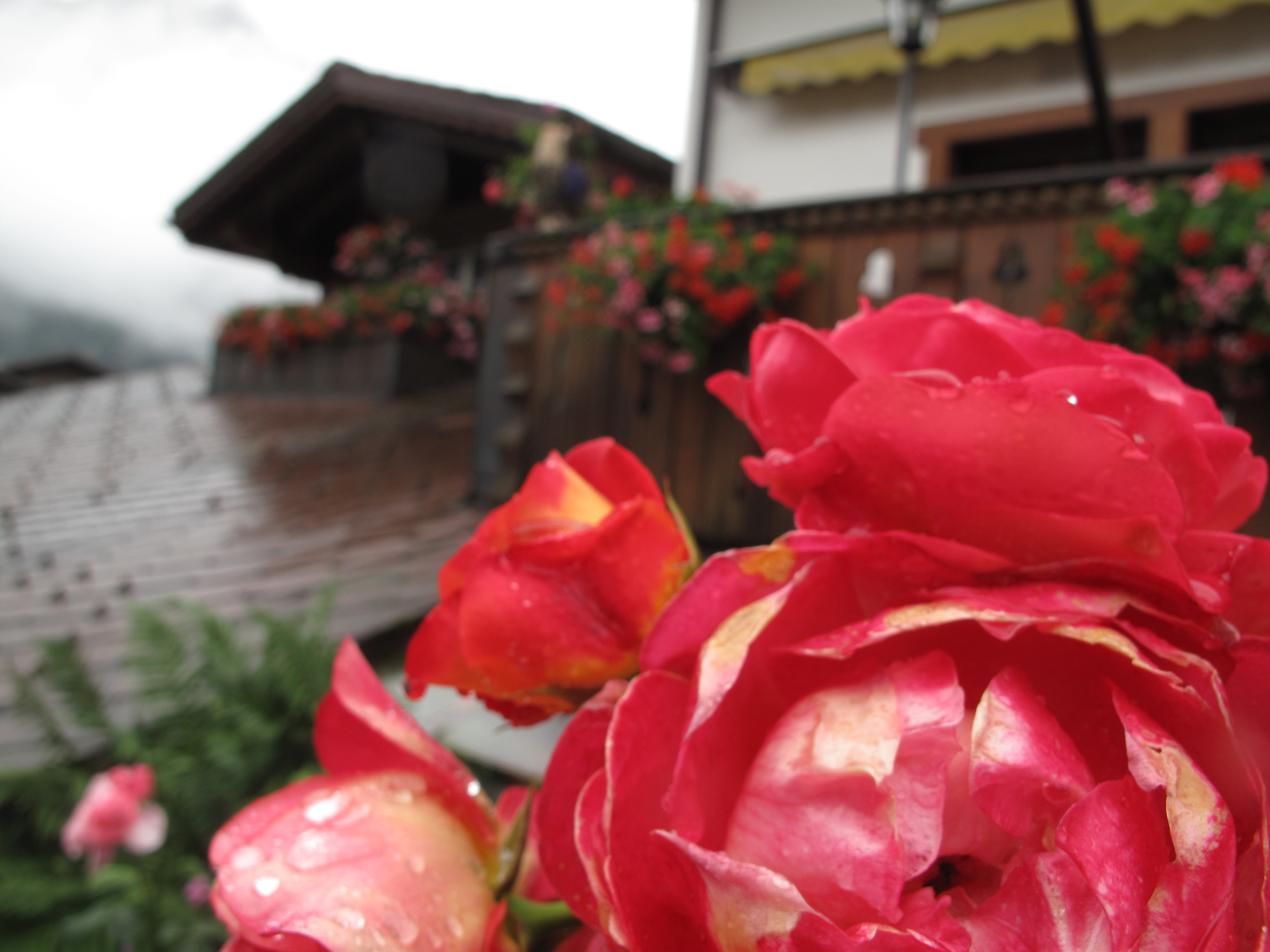 Pink flowers and a wooden chalet in Switzerland's Lauterbrunnen Valley