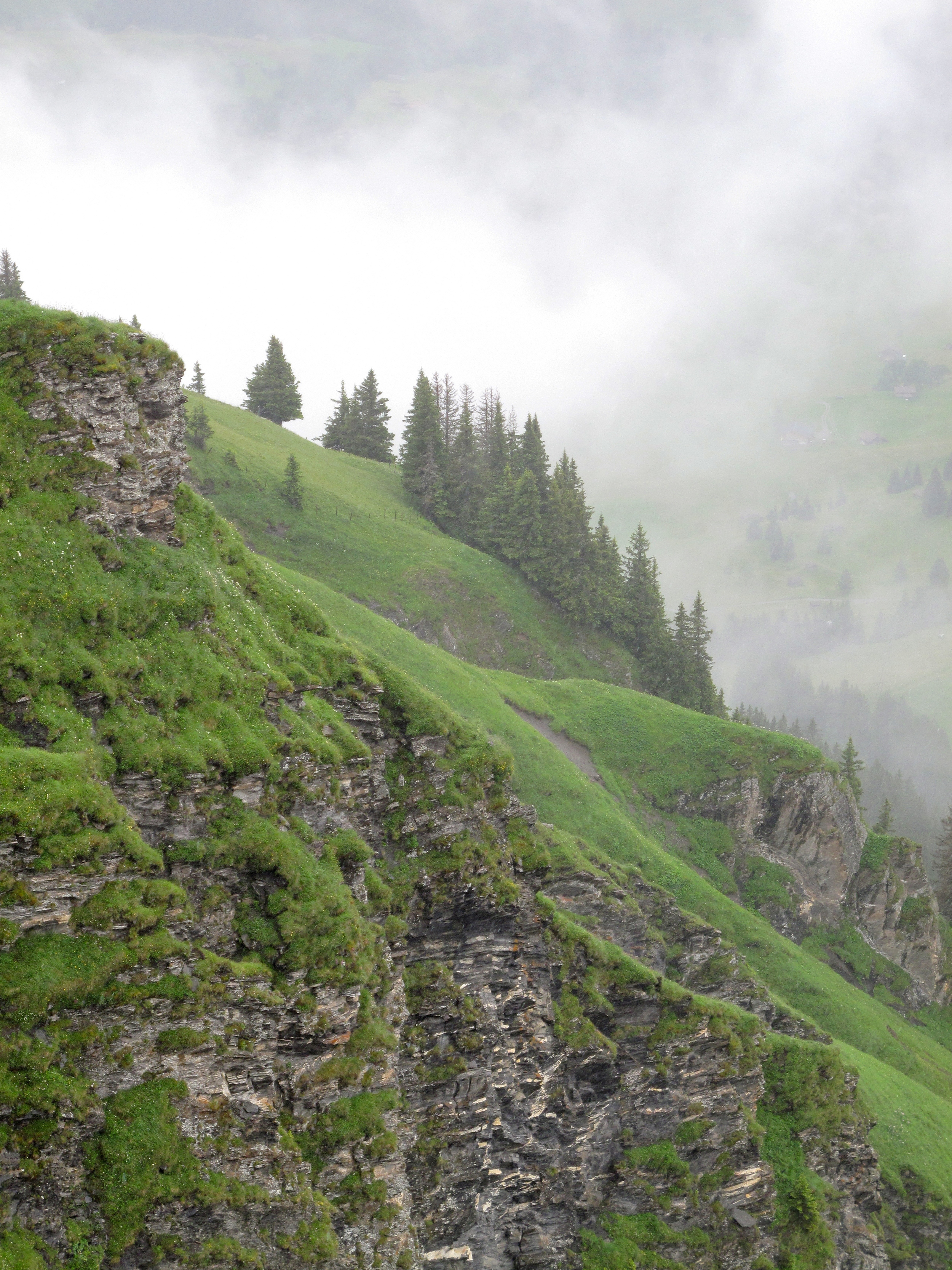 The Swiss Alps in summer time where it is still snowing on the green grass of the mountains and the pine trees.
