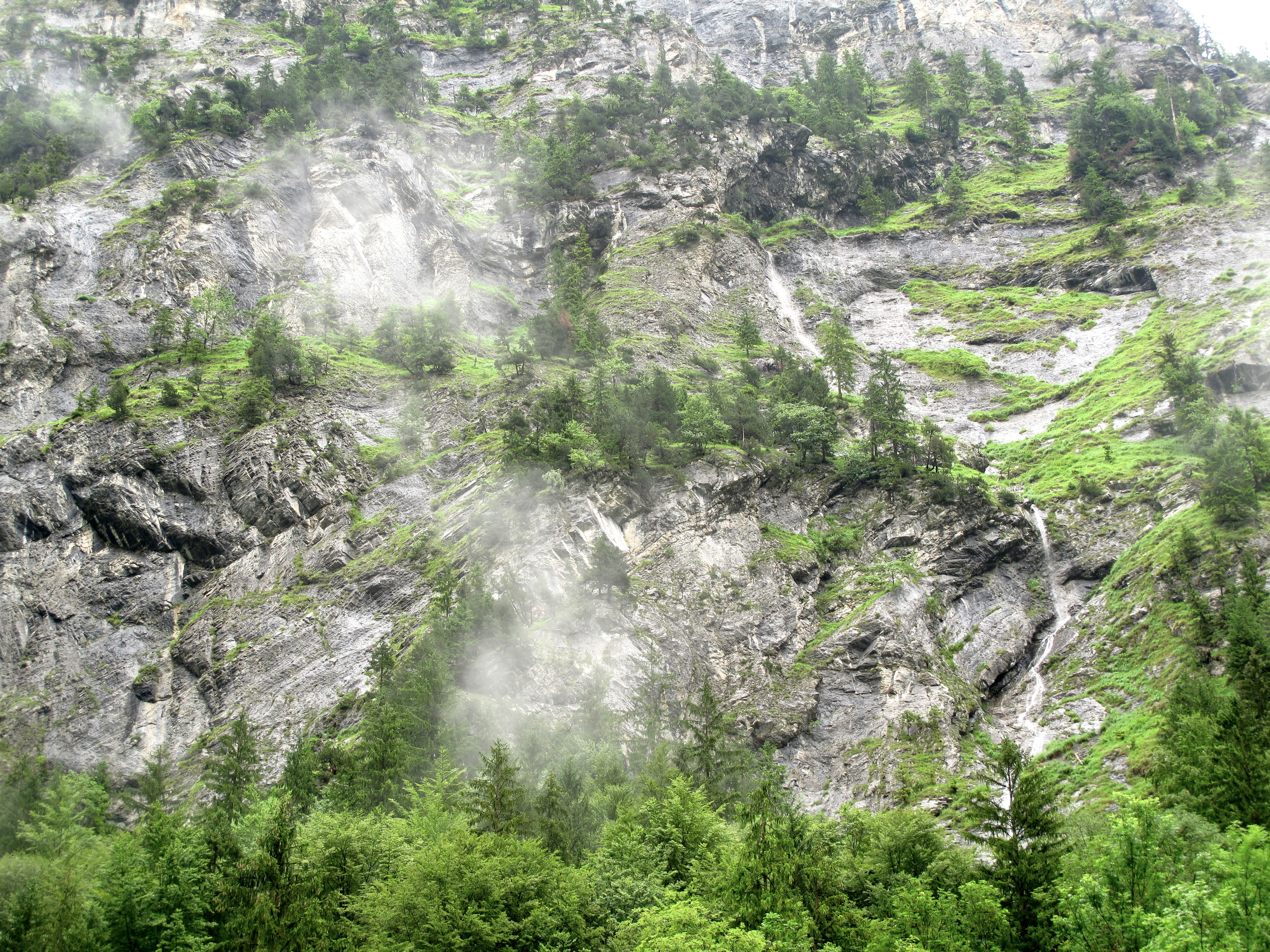 Beautiful alpine scene of swiss mountains, rocks, moss and small pine trees all shrouded in clouds